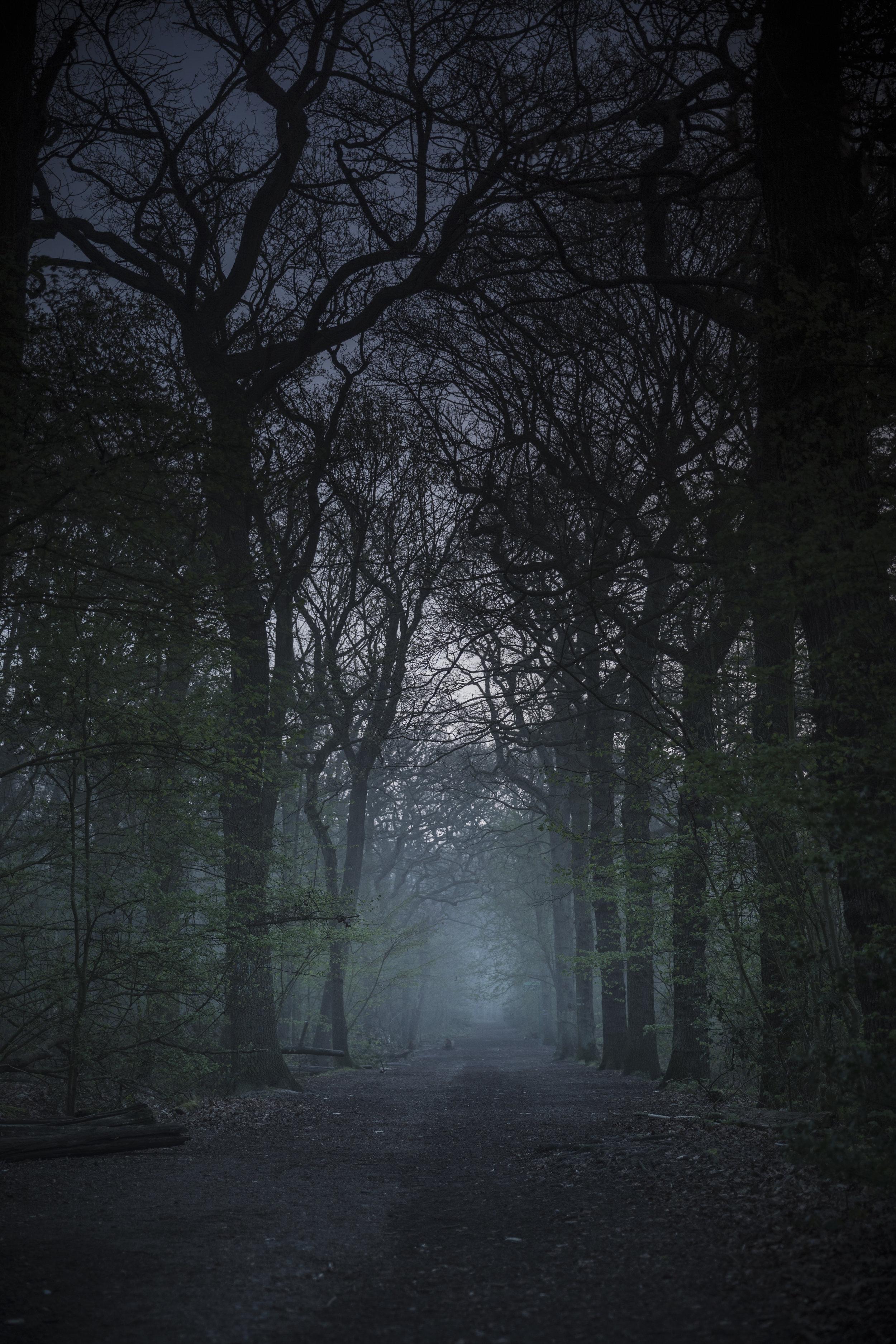 Oxleas Woods.jpg