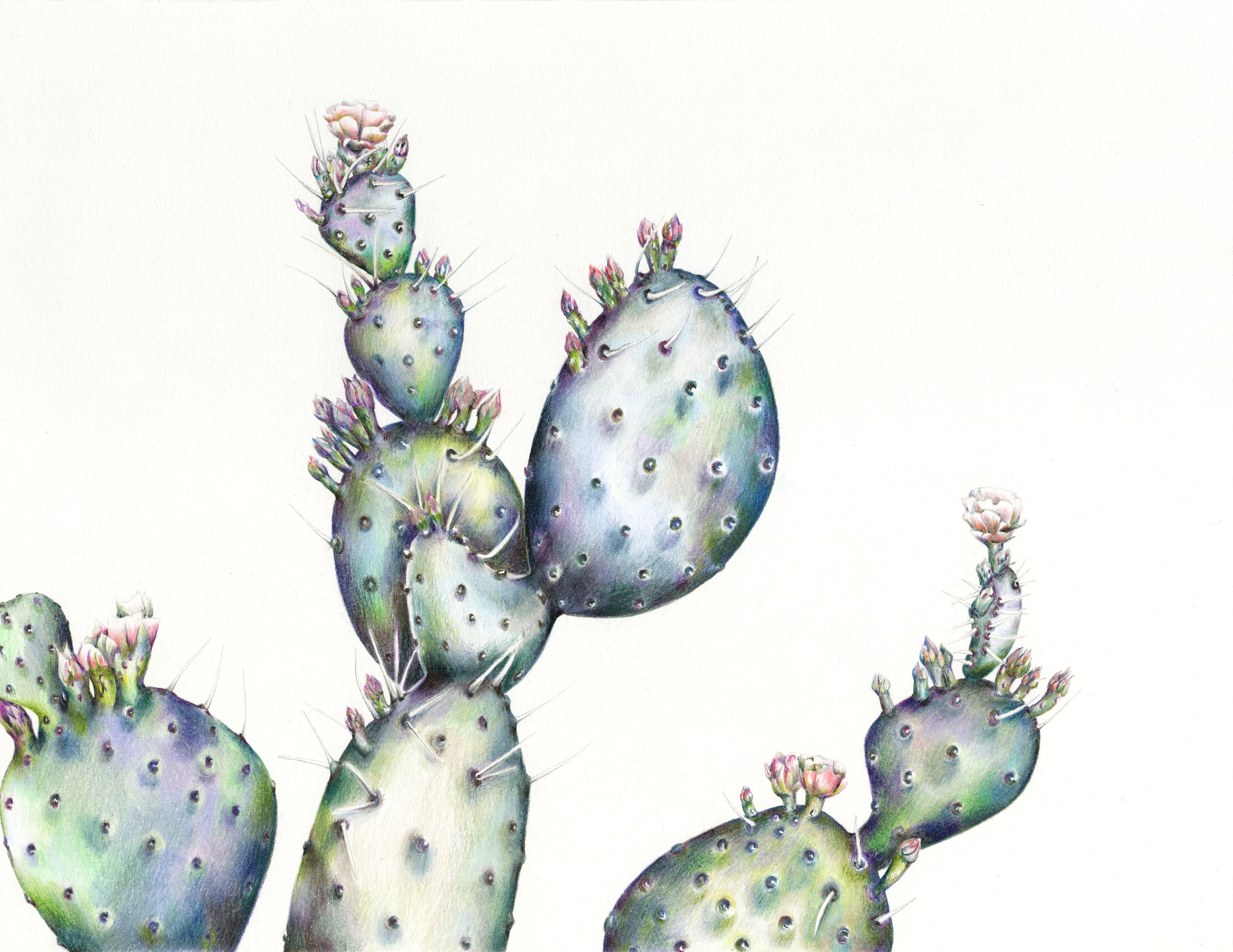 Charlotte's own take on the Jewel theme which is set to be hot this year, her Prickly Pear