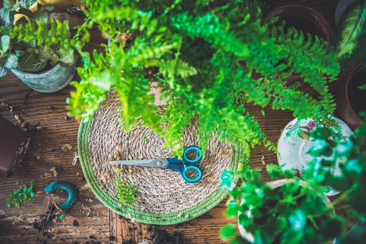 Plants on my table-5.jpg