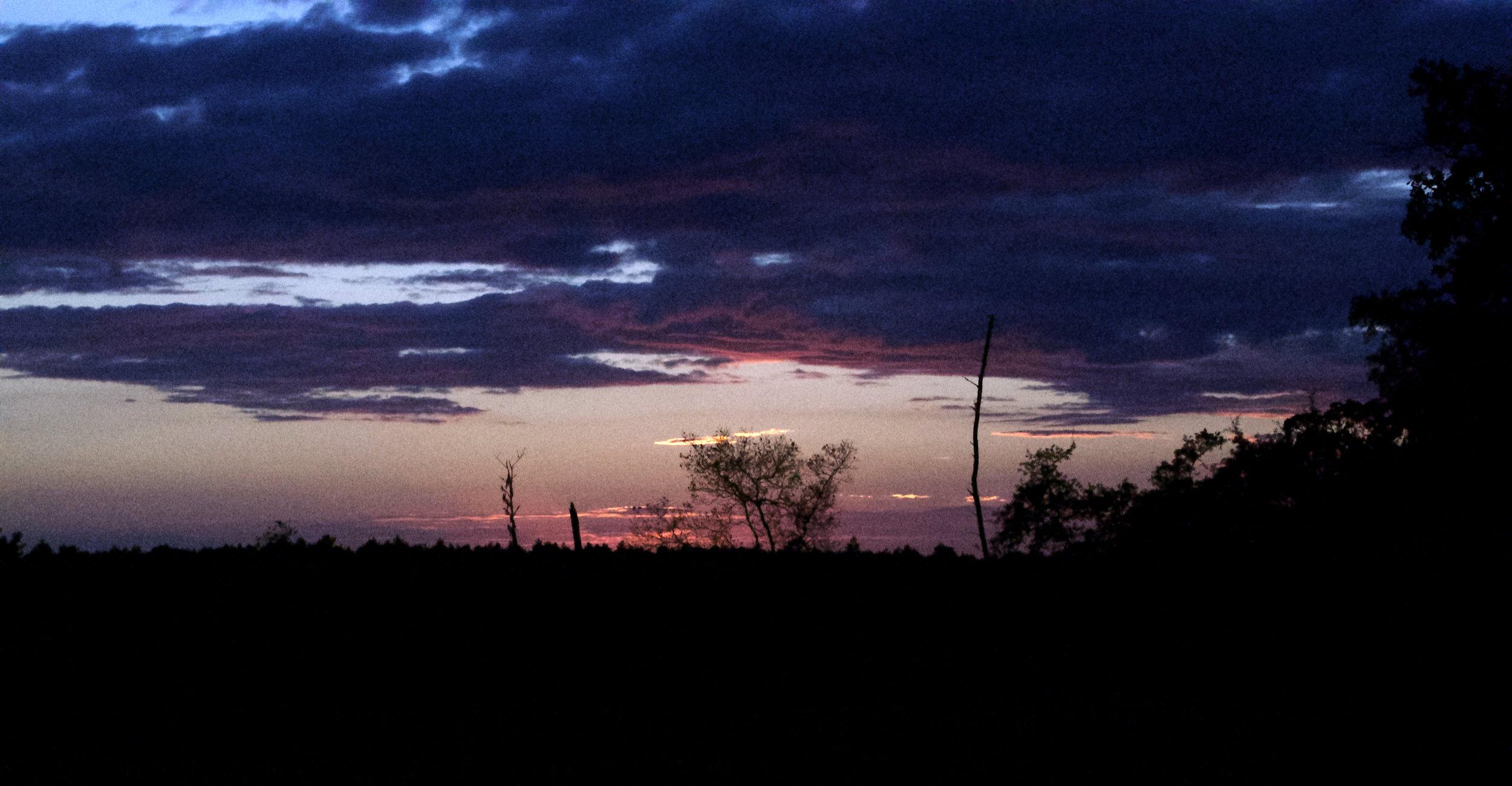 Sunset off Highway 19. Ocala Natl Forest, FL, 2016. Photo Credit: Stephen Feibelman