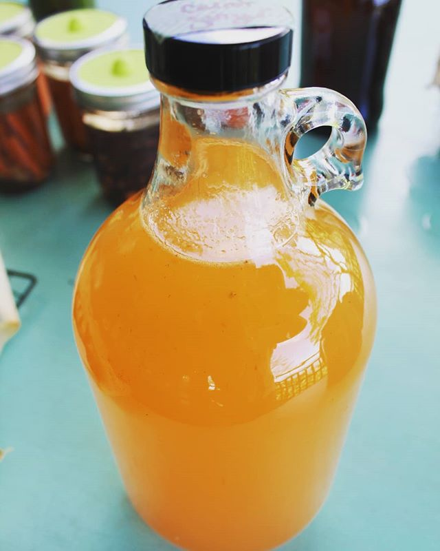 Trying out a new water kefir flavor: carrot ginger! 🥕🥕 . . . #waterkefir #tibicos #guthealth #probiotic #fermented #scoby