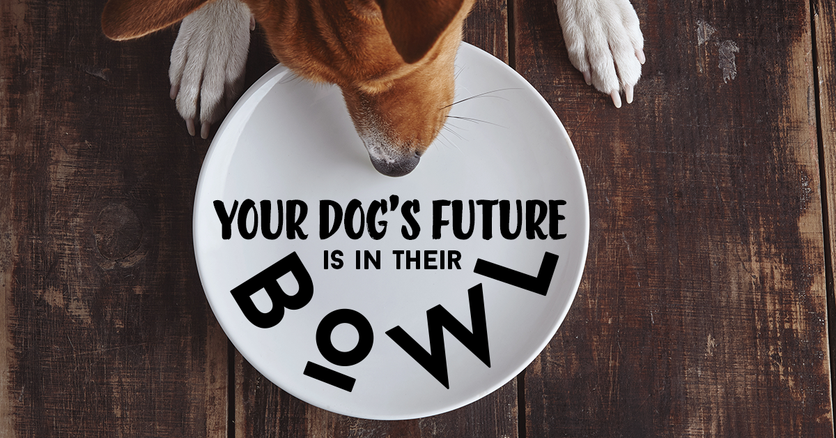 saving-dogs-lives-with-keto
