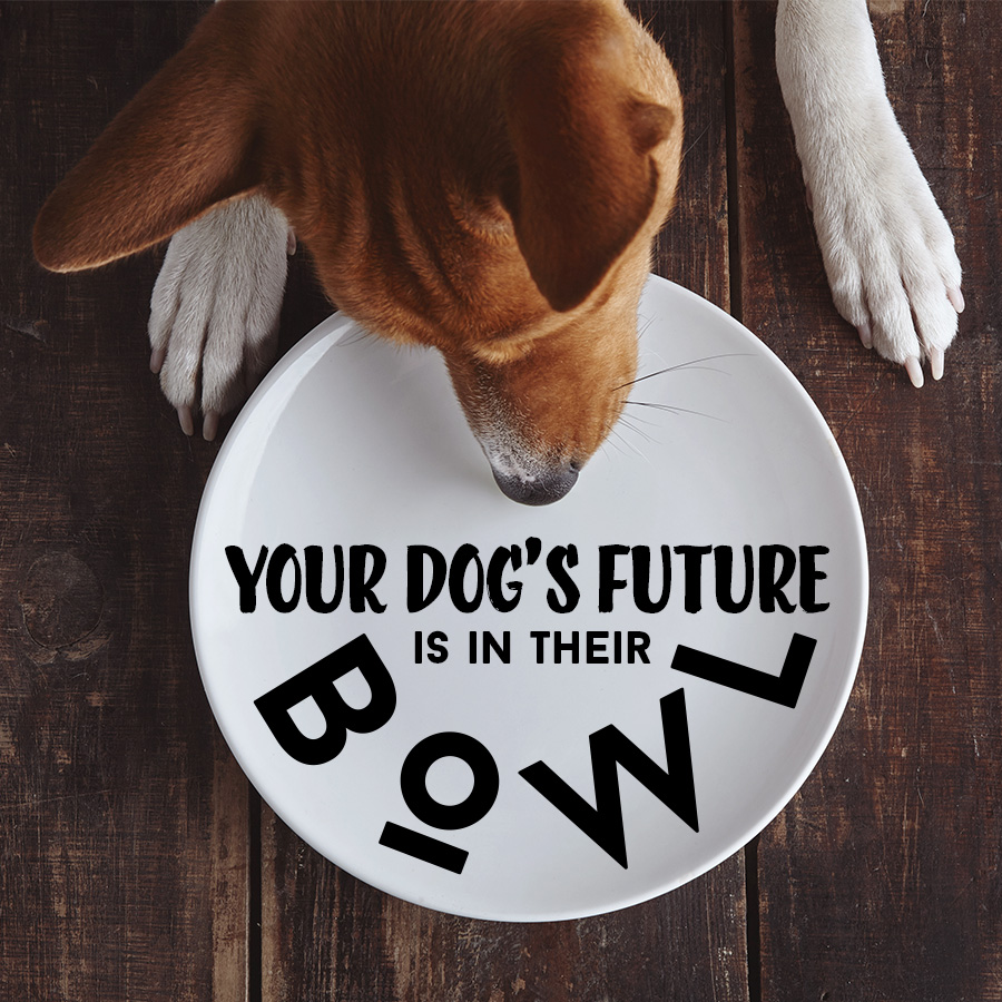 The Future Of Dogs Is In Their Bowls.png