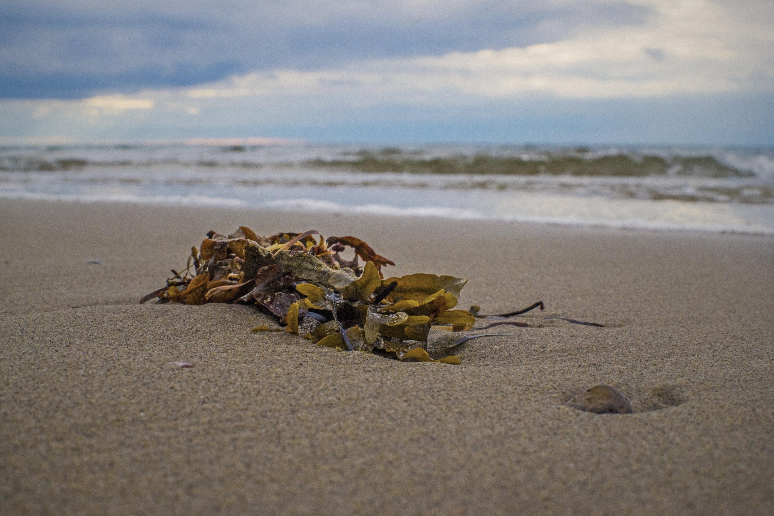 """""""Des scientifiques ont déterminés qu'il y a probablement 5 à 10 fois plus d'étoiles qu'il y a de grains de sable sur toutes les plages du monde"""""""