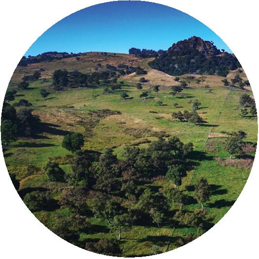 Forest Habitat Restoration -