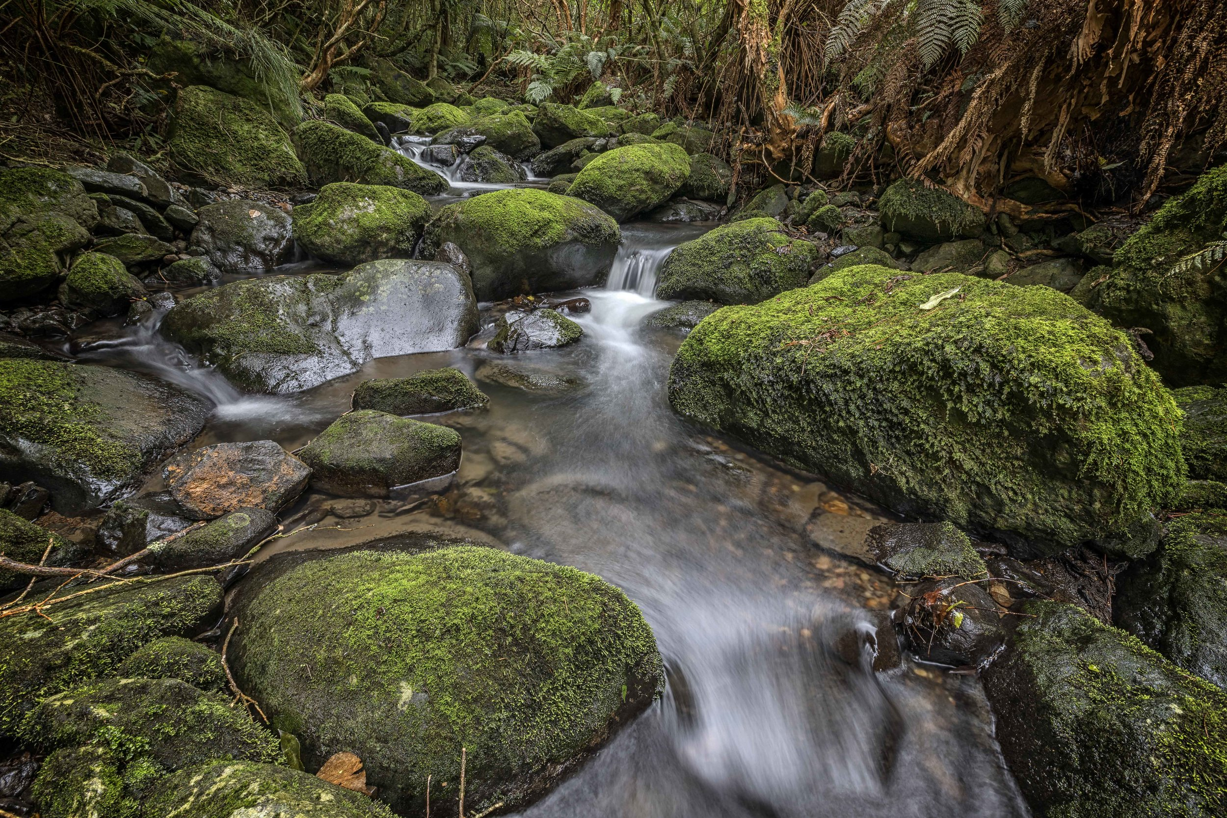 Lindsay Creek by Andy Thompson