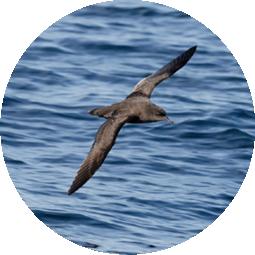 Seabird Habitat Enhancement -