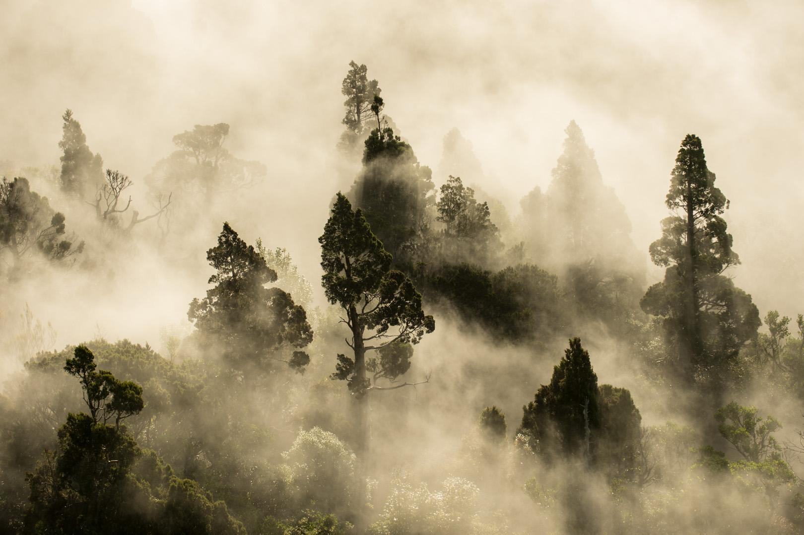 Cloud Forest by Craig McKenzie