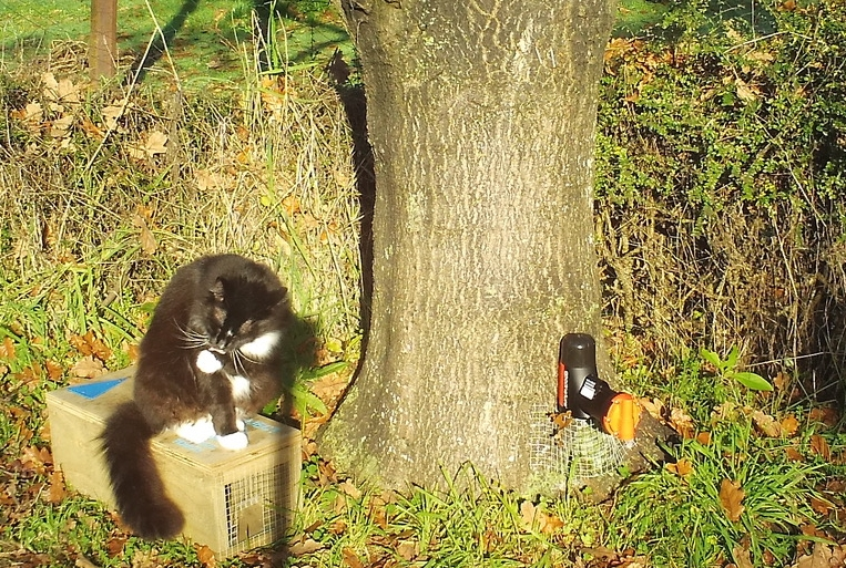 Shogun, the cat, sits on a dummy Doc200 trap box