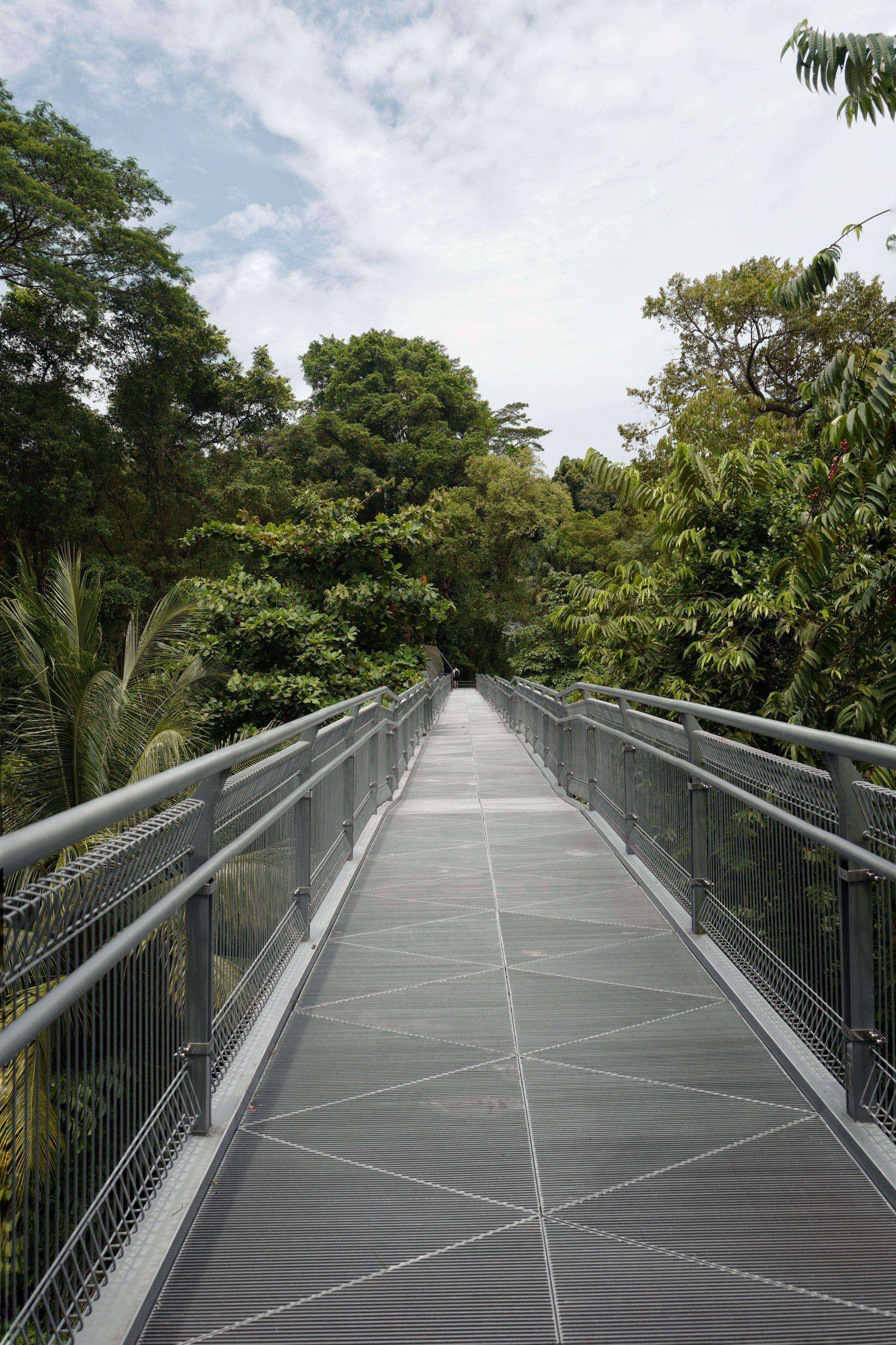 A bridge on the    Southern Ridges