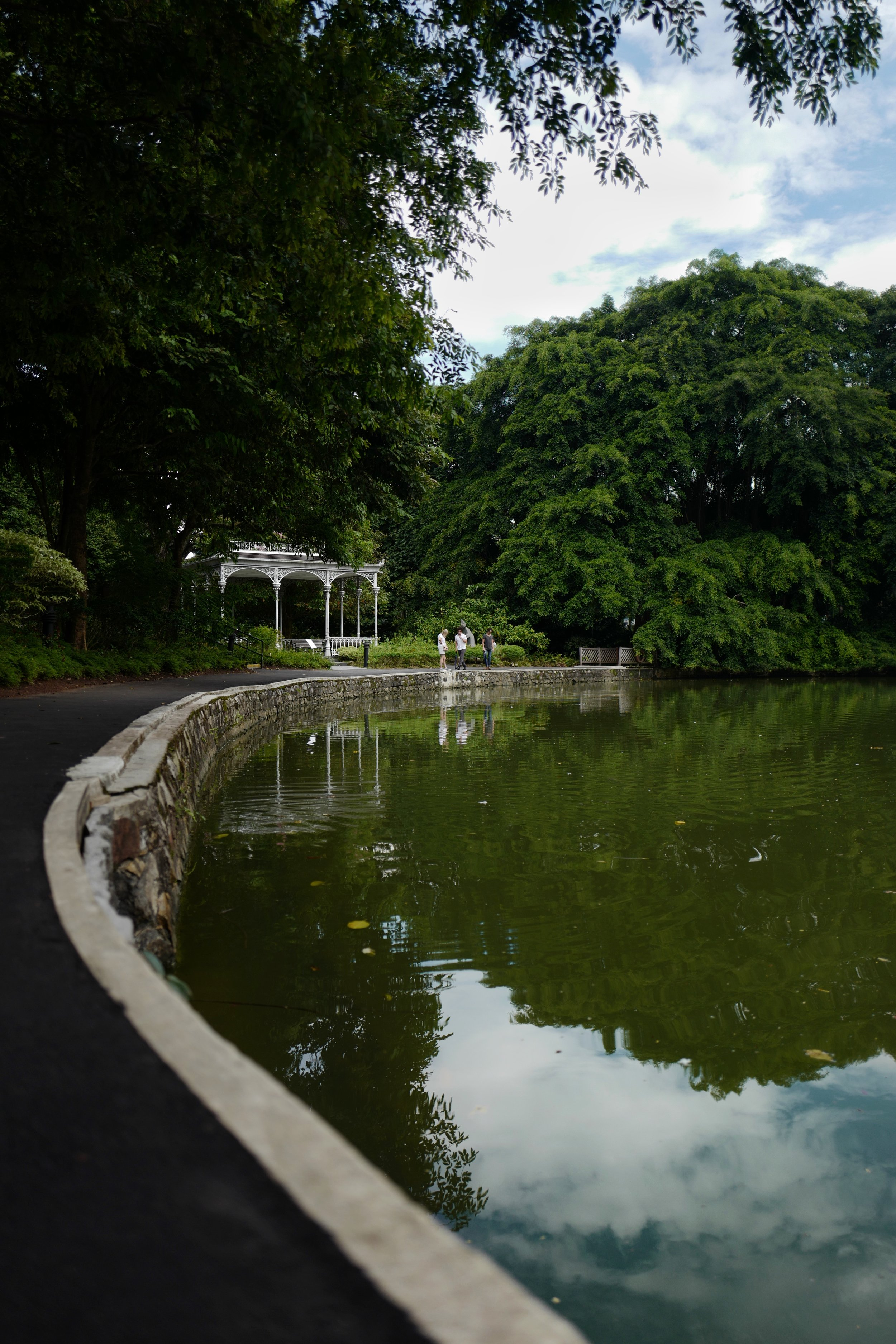 Swan Lake    at the    Singapore Botanic Gardens