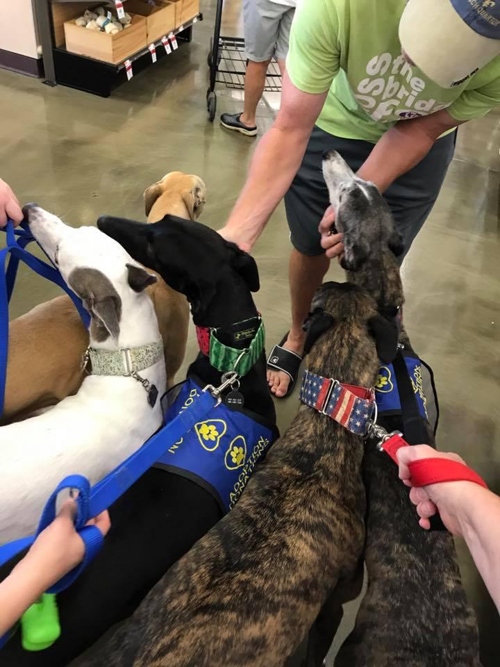 Greyhound ambassadog Racing to Retirement Greyhound Adoption