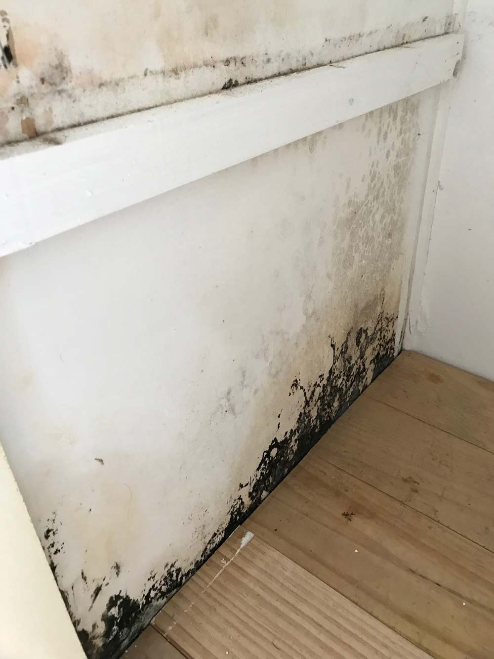 Black mould on white wall