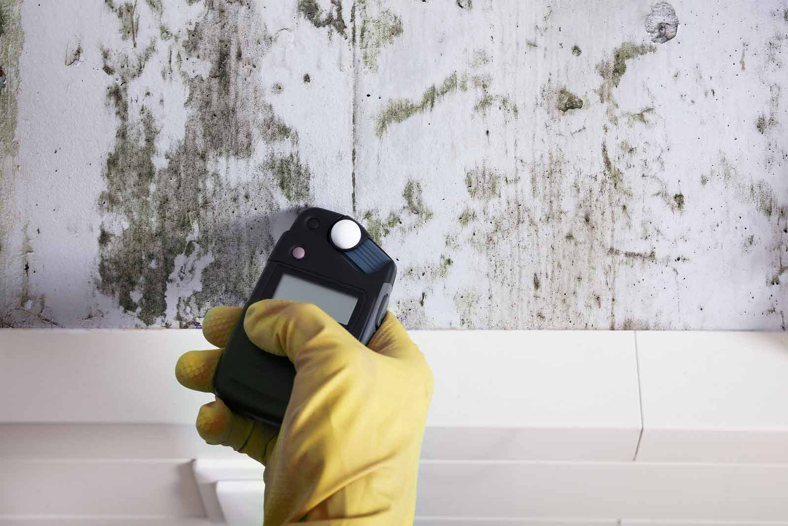 Gloved hand testing moisture levels in mouldy wall