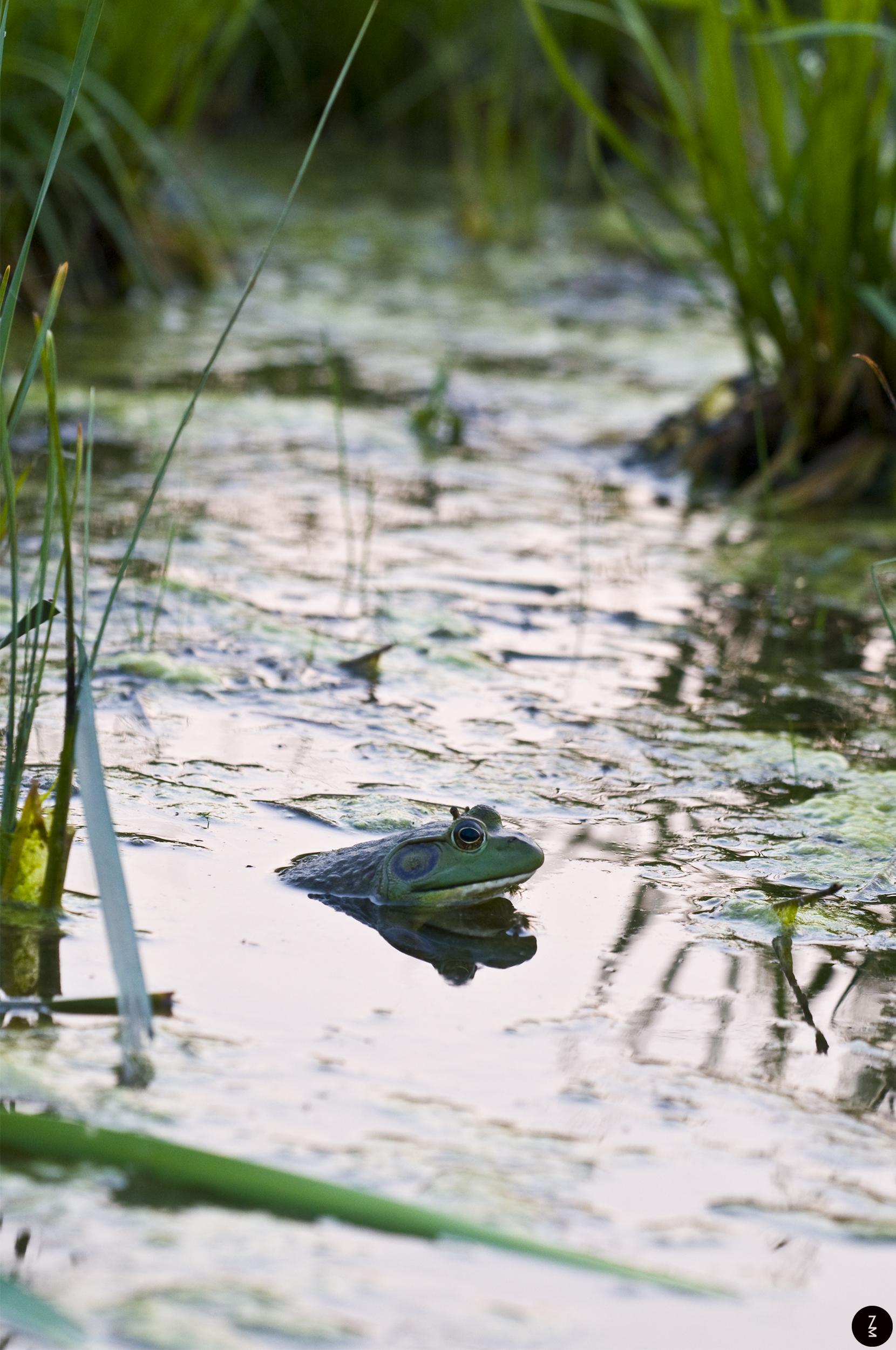 Frog   2013