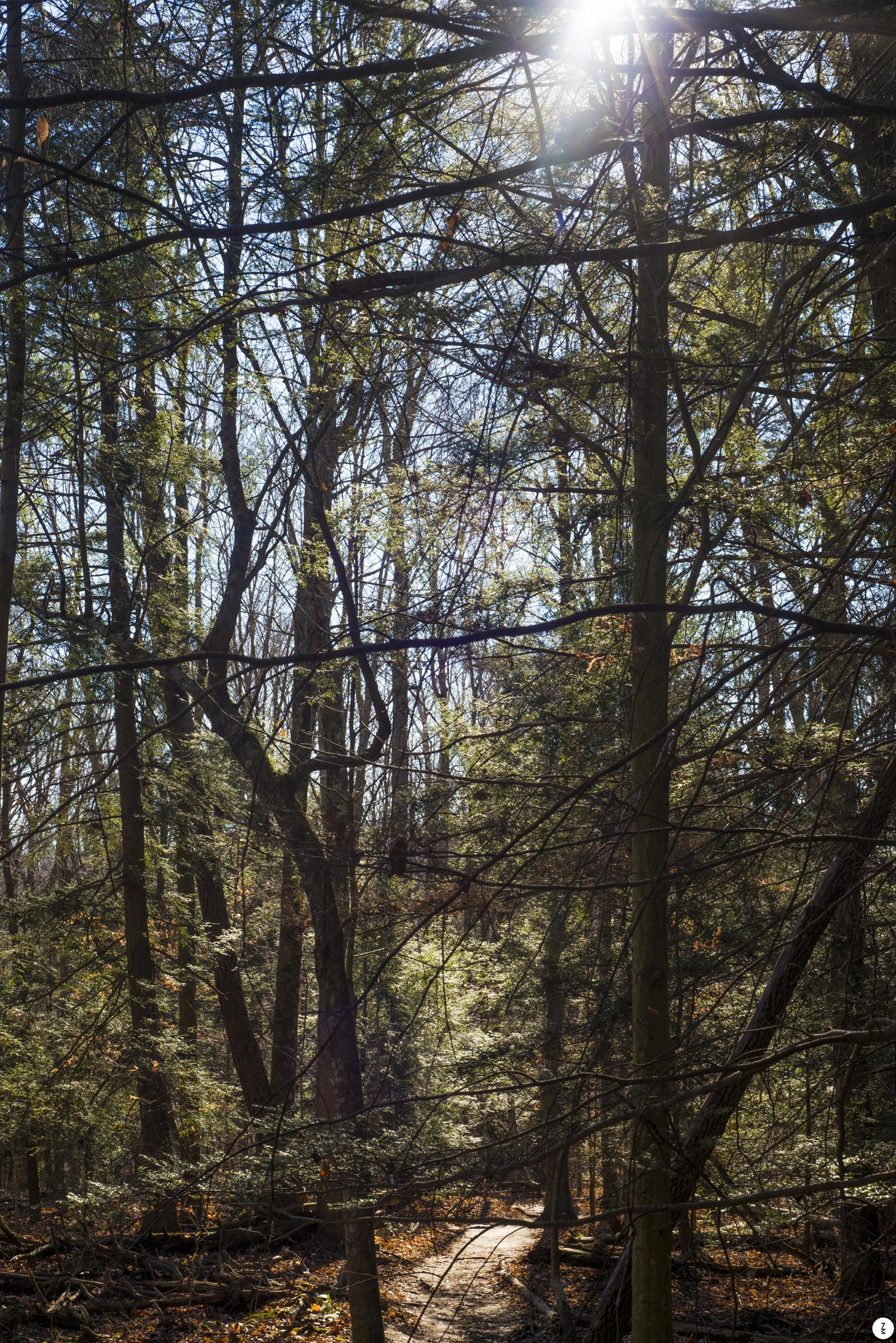 Woods   2015