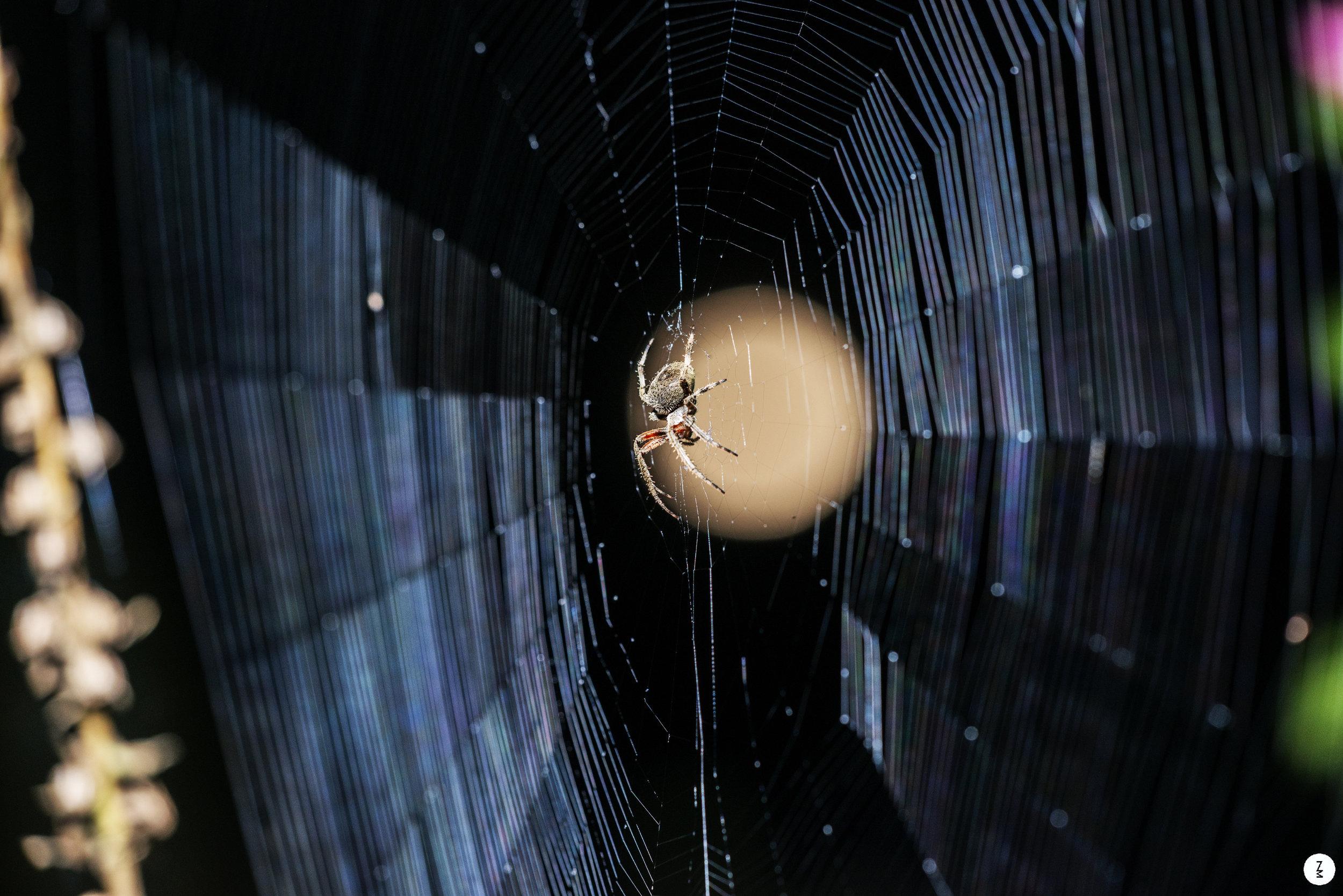 Spider   2015