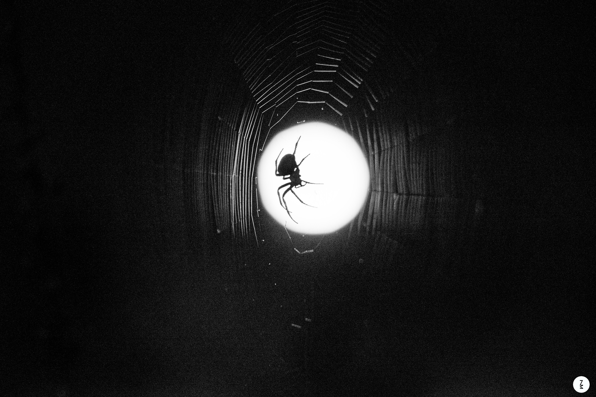 Spider in Front of a Full Moon   2015