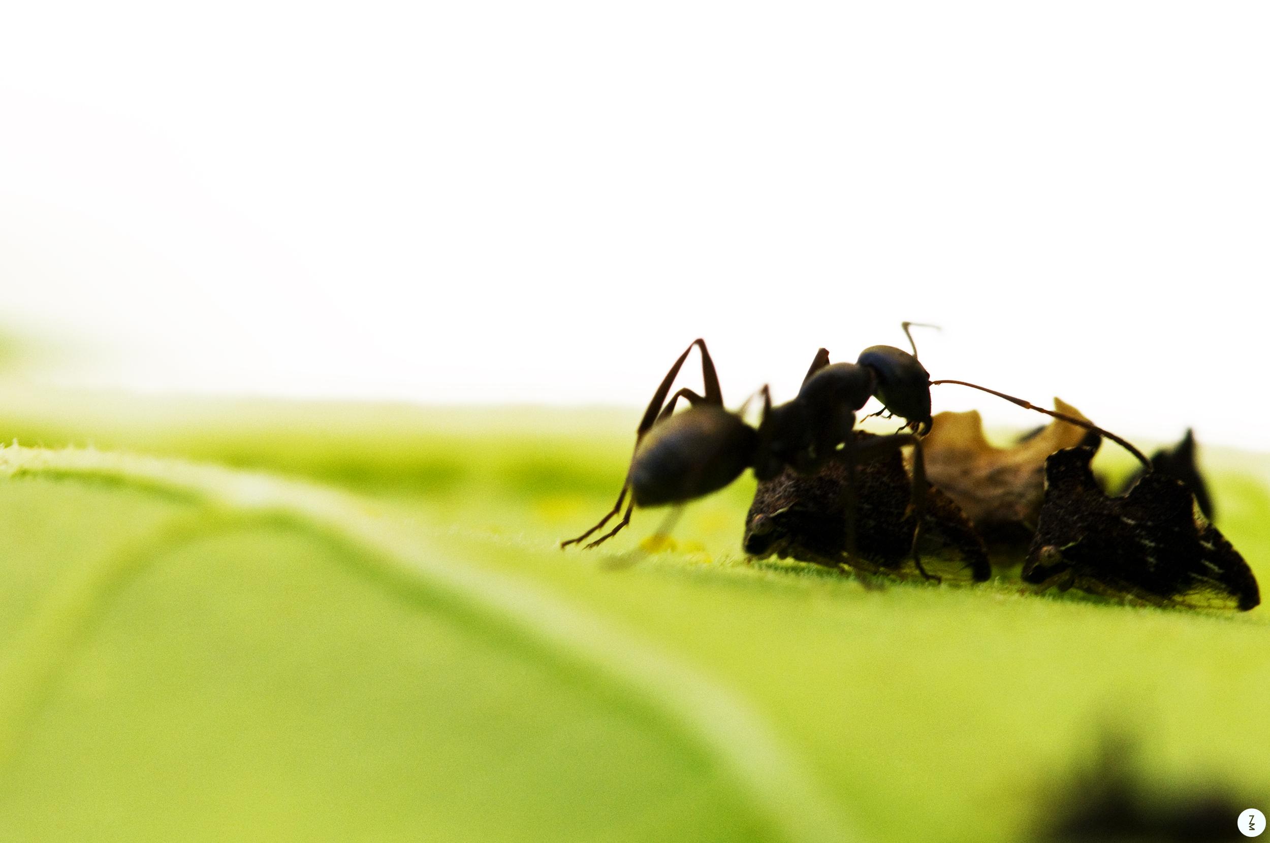 Ant   2010