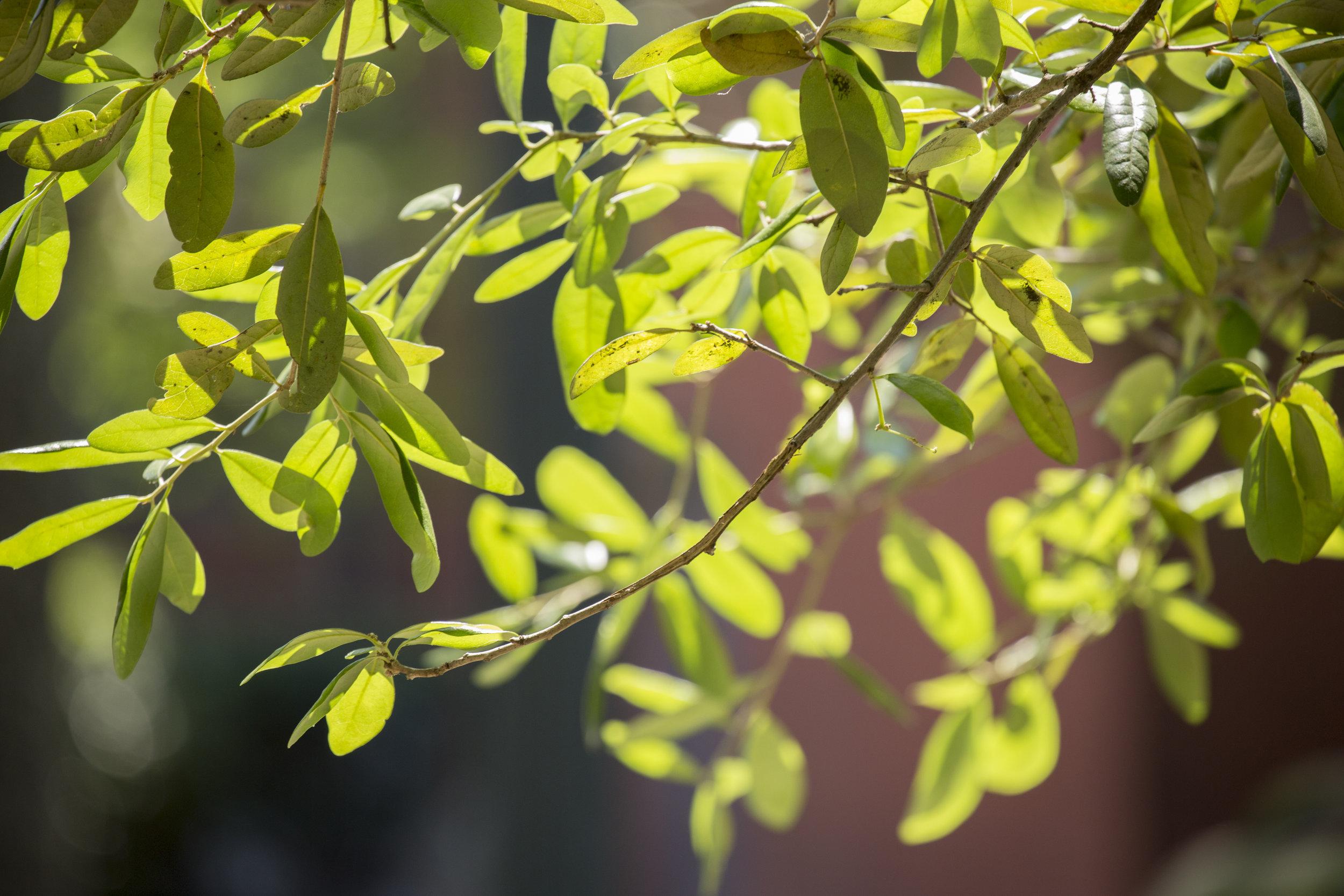 plantBloom3.jpg