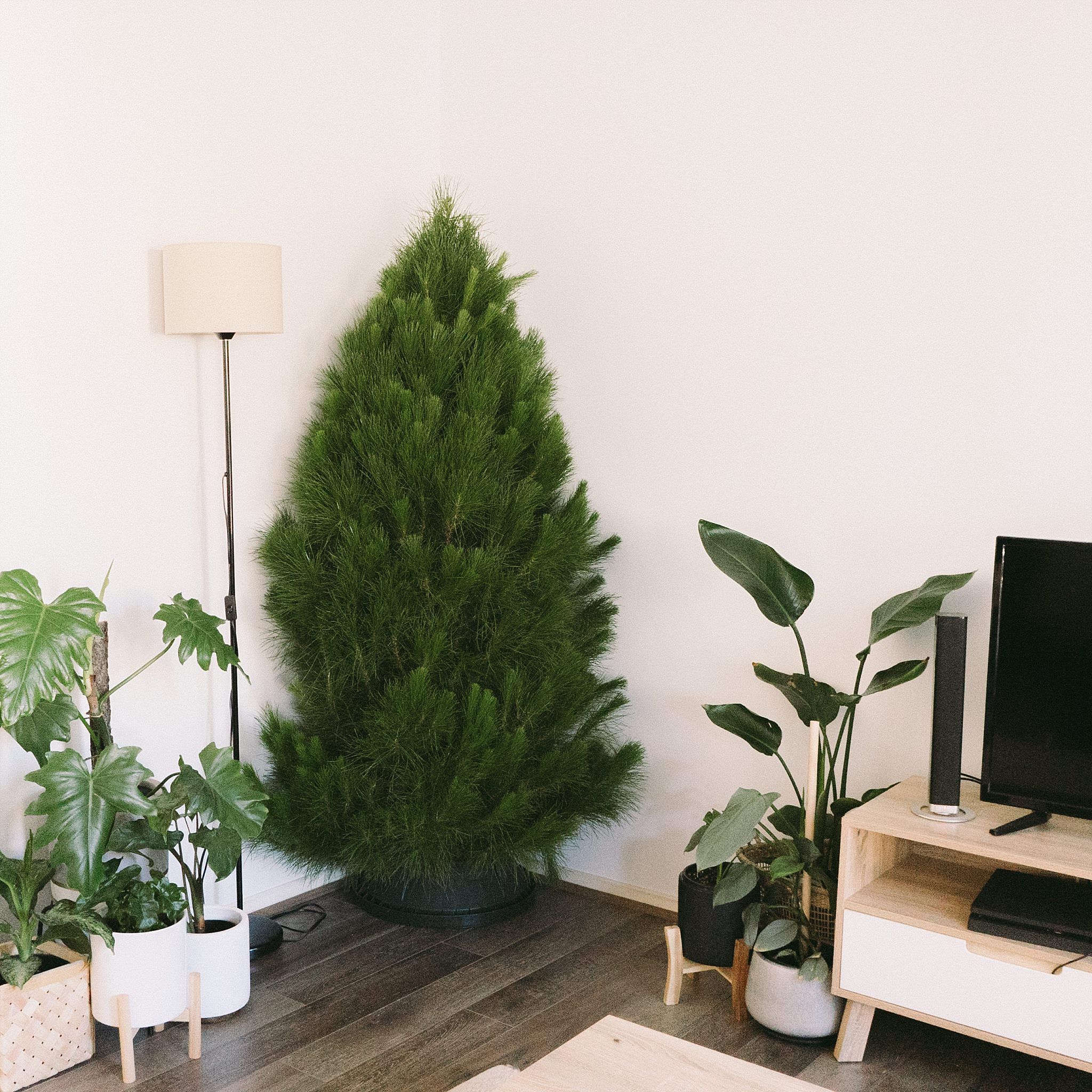 2018-November-30 Holidays 12.jpg