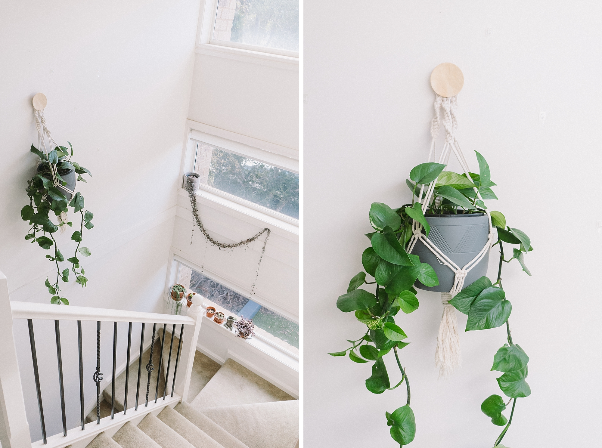 The new plant hanging in the staircase (a Jade Ivy).