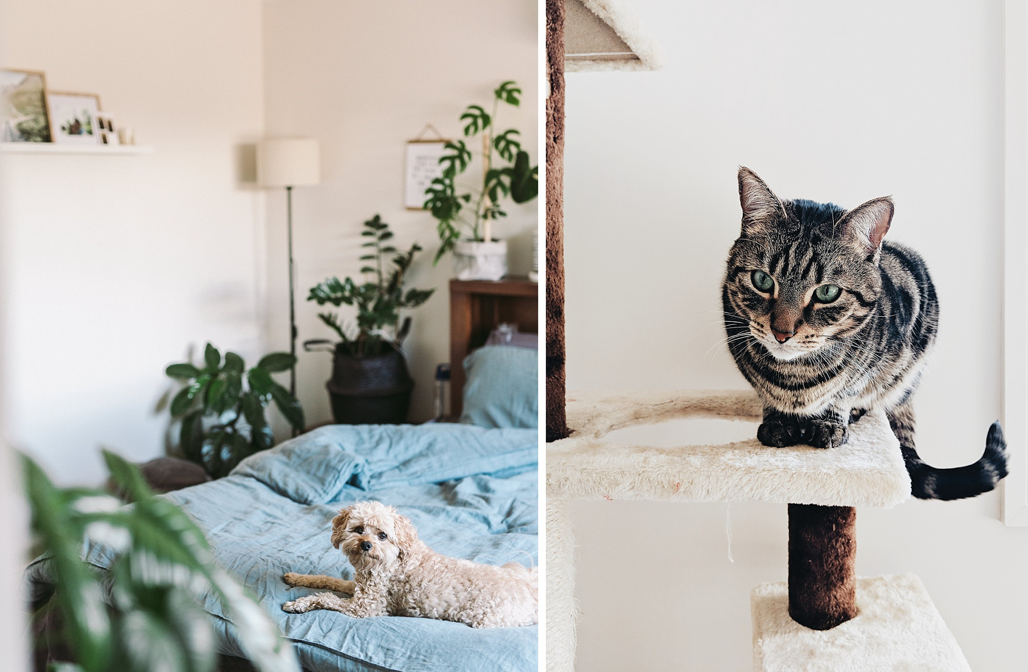 We all love it in here - Tykey's cat stand is right next to the window which is one of his favourite spots in the house.