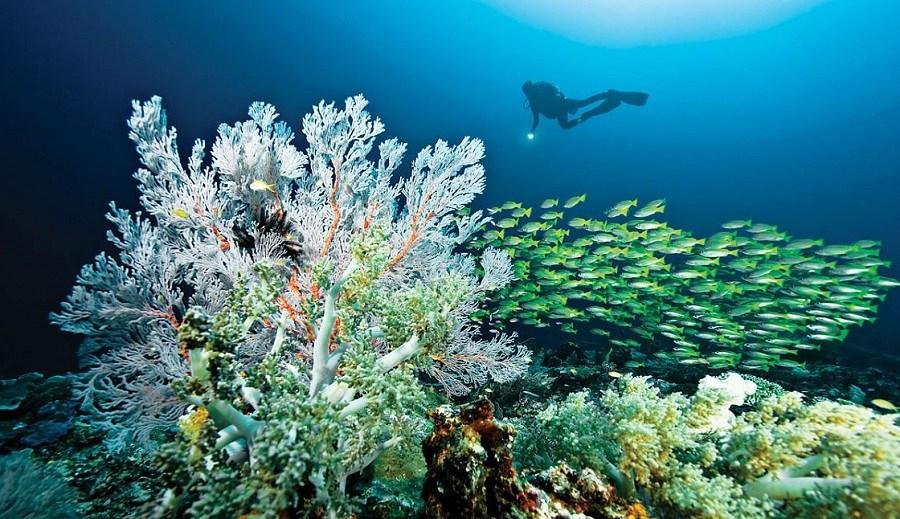 Raja-Ampat-Diving-Underwater-Pictures.jpg