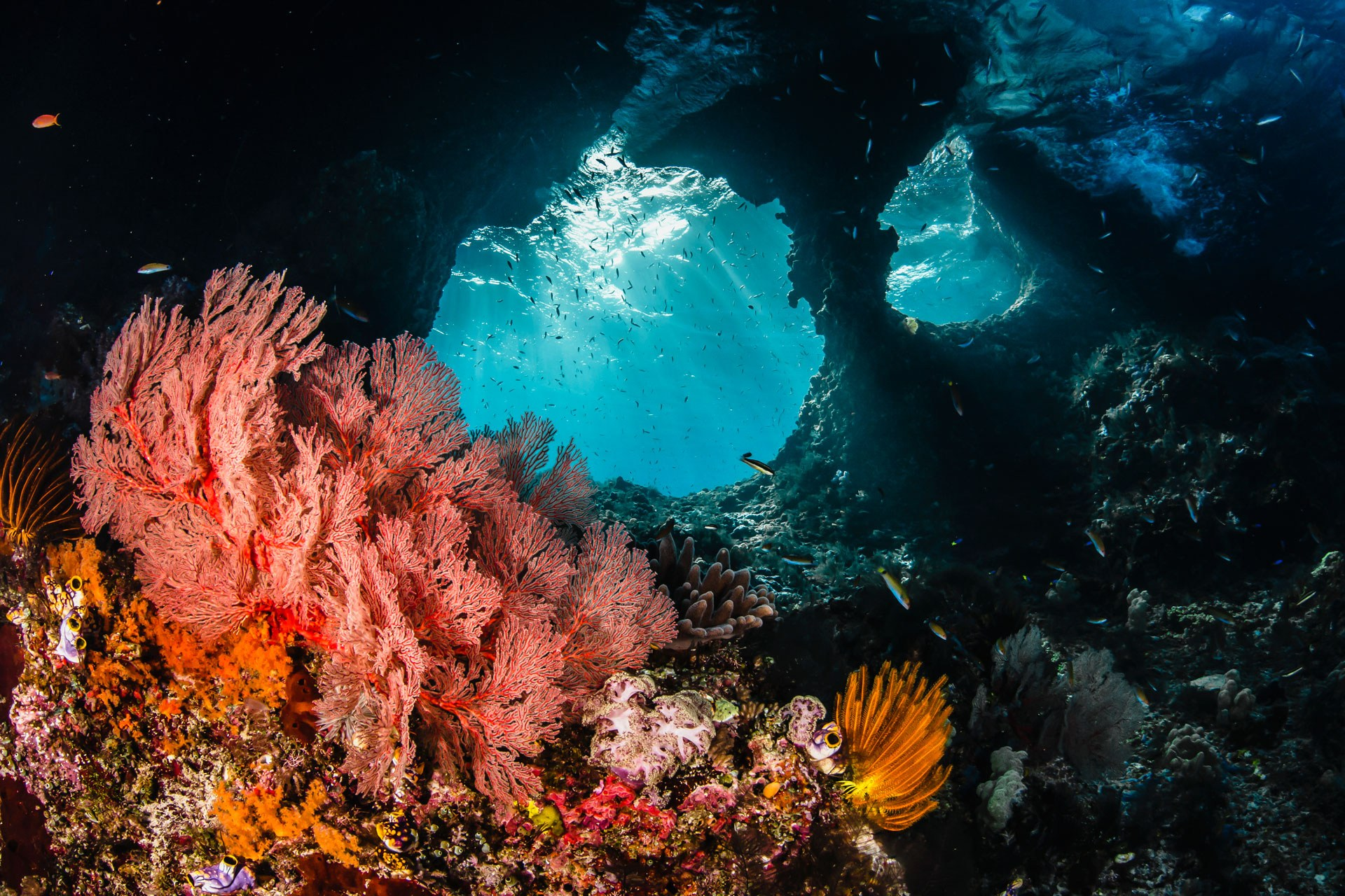 Raja-Ampat-Nature-Underwater-Diving-Photo.jpg