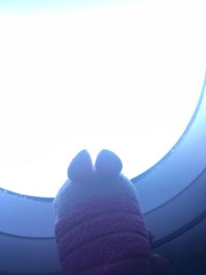 Pocket Piglet on a plane!