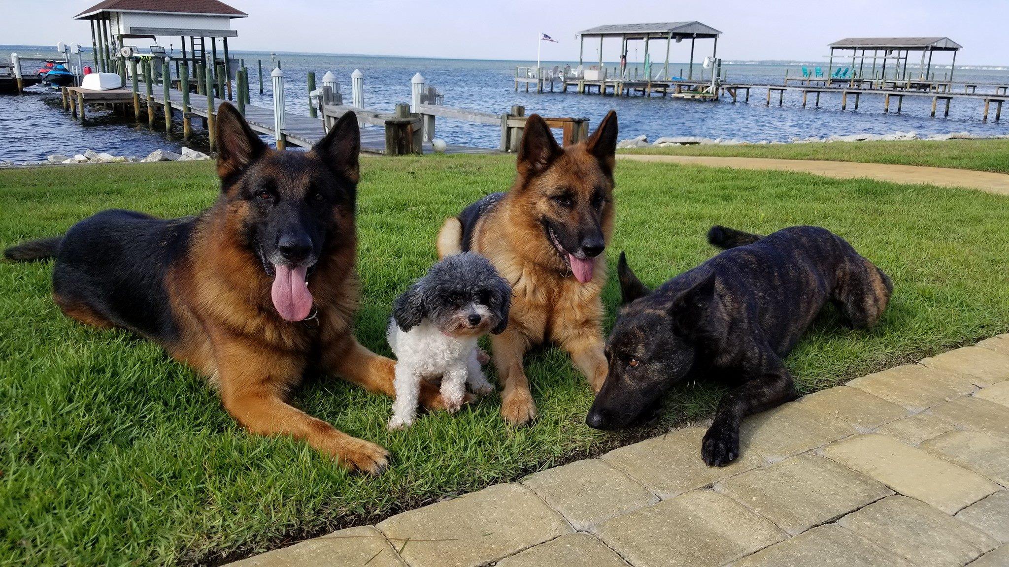 multi-dogs.jpg