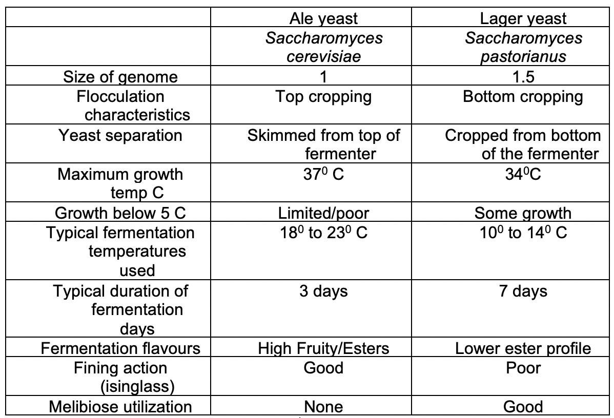 Tabla 2 Comparación entre las características de la levadura Ale y la levadura Lager
