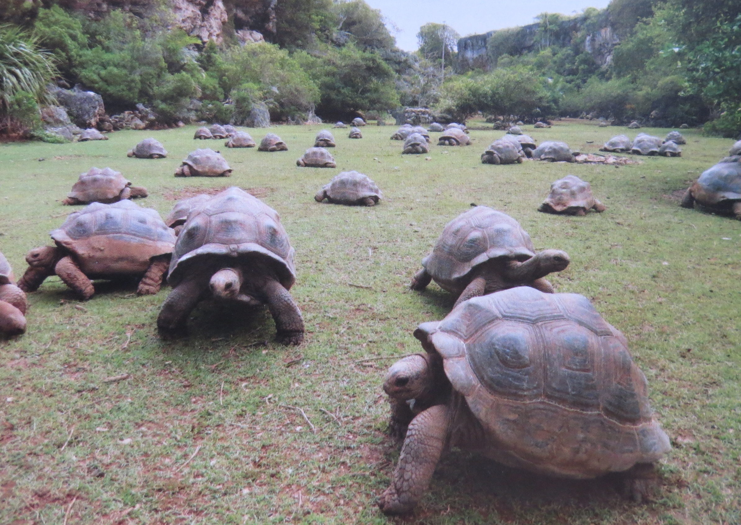 More tortoises than we've ever seen.