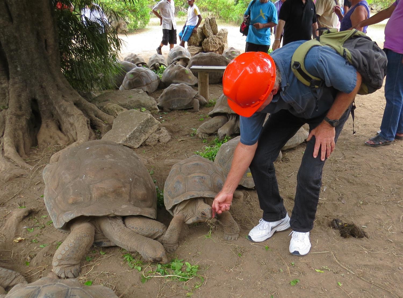 as tortoises go