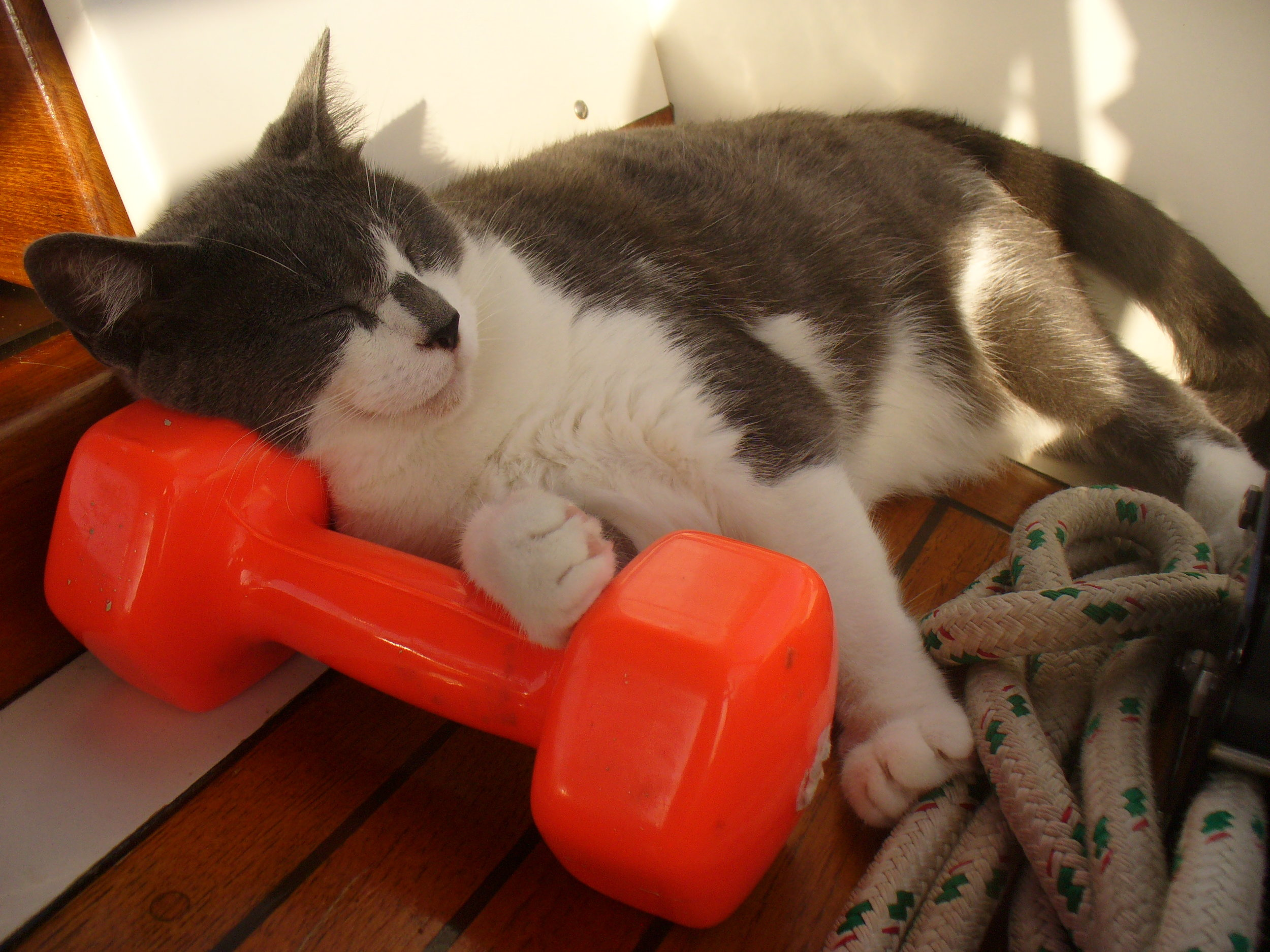 Exercise is highly overrated, but exercise equipment can be useful.  Never miss the opportunity for a nap.