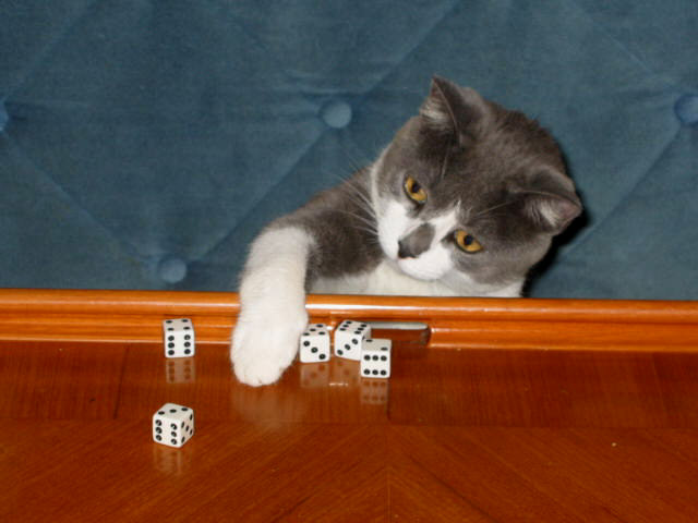Join in games if you feel like it, but  NEVER let them win  just because they're human. They'll respect you for it. Please note that without any help from humans, I have thrown a 5-dice yahtzee long straight ... rack up the points!