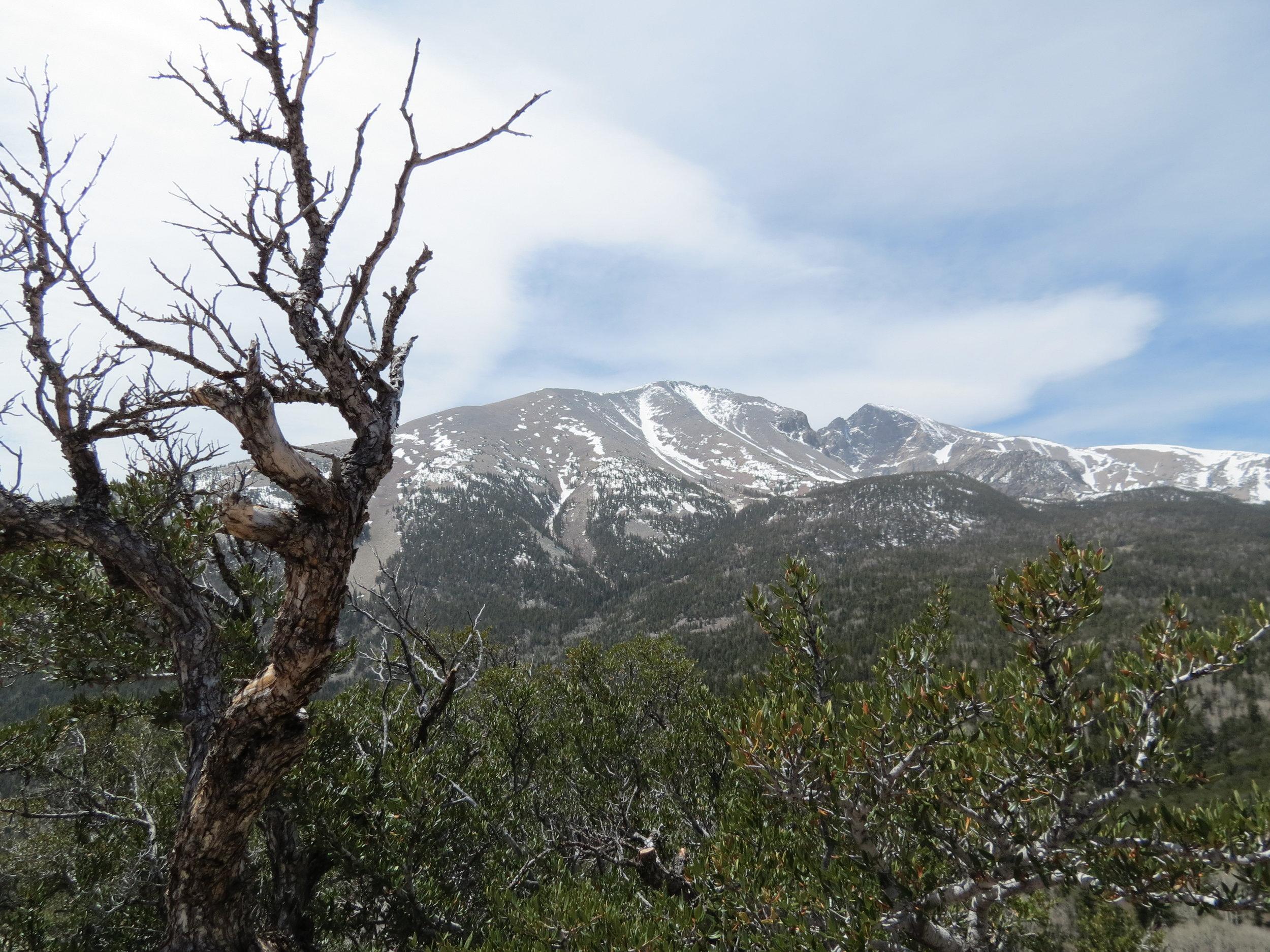 Great Basin National Park  - Nevada - 2012