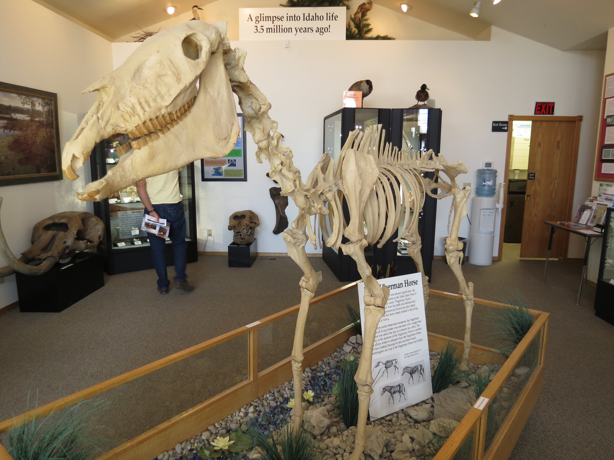 Hagerman fossil beds national monument  - hagerman horse - Idaho - 2012