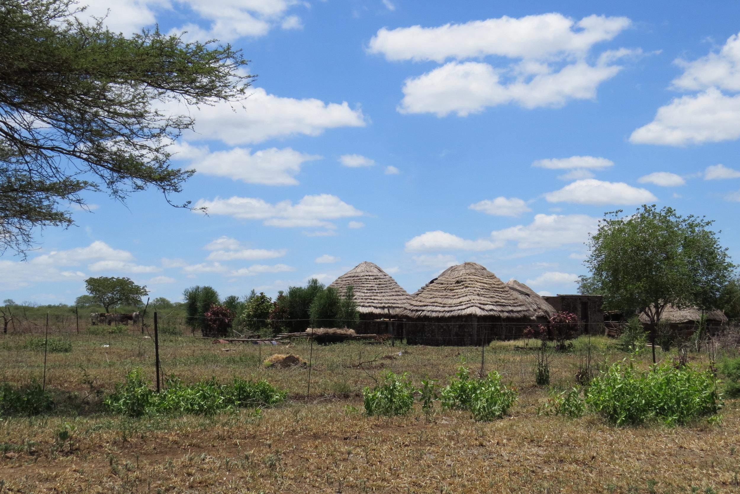Swazi huts along the roadside