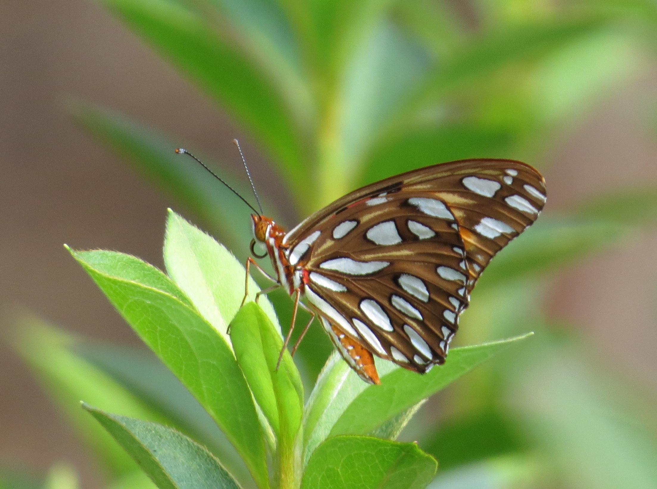 Butterflies flit