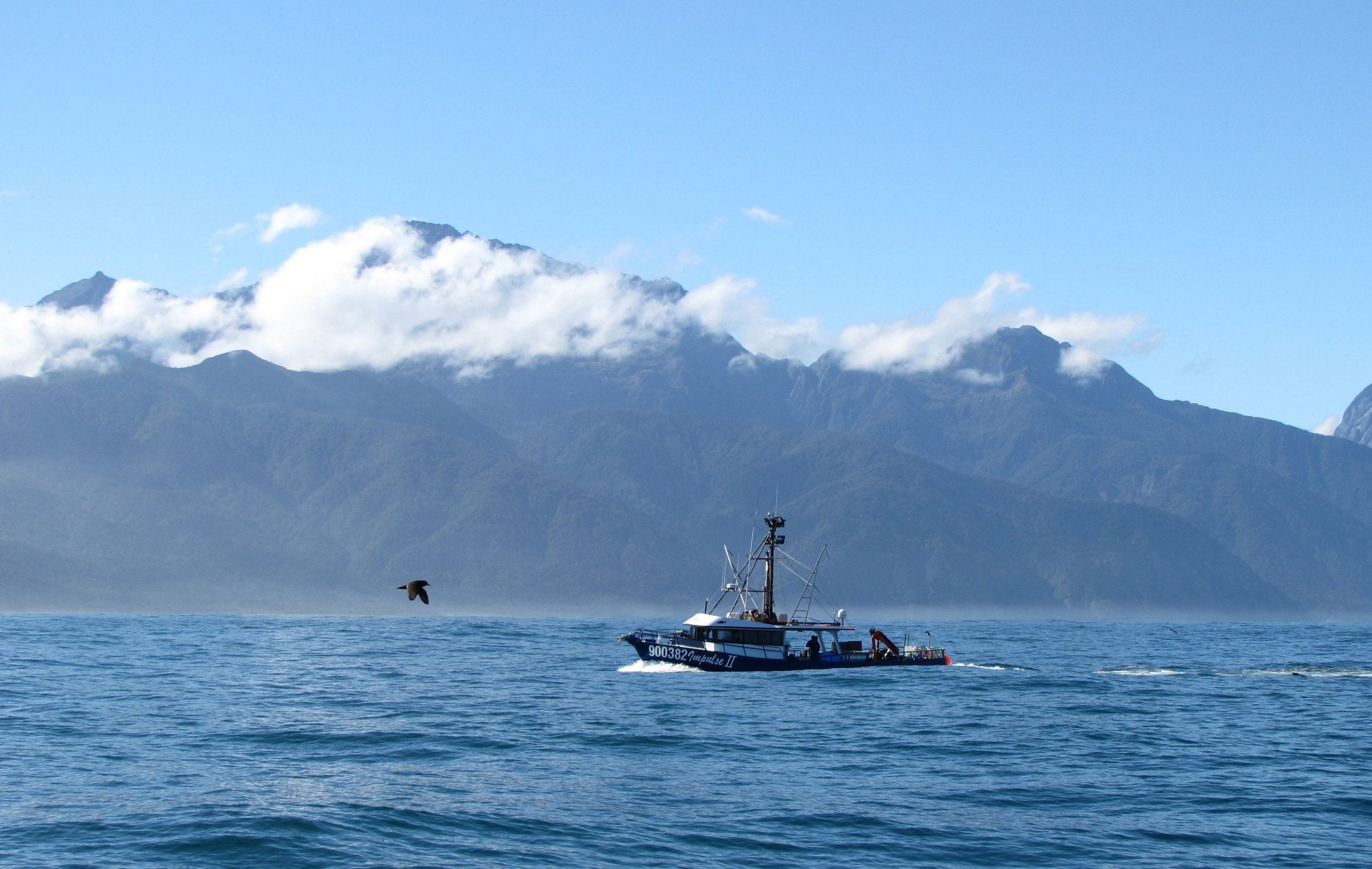 A fishing boat at the entrance to Milford Sound