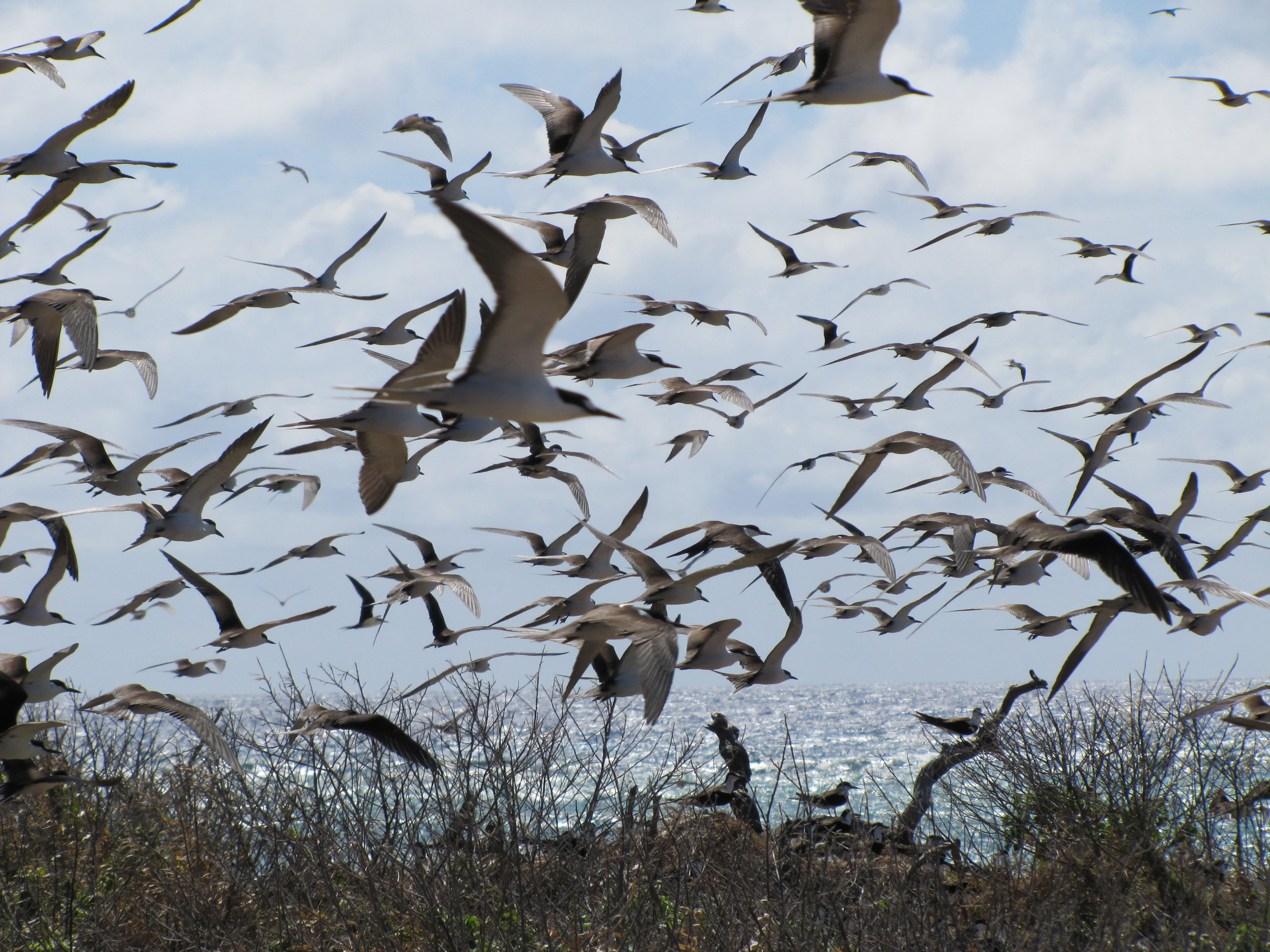 Lots & lots of birds!