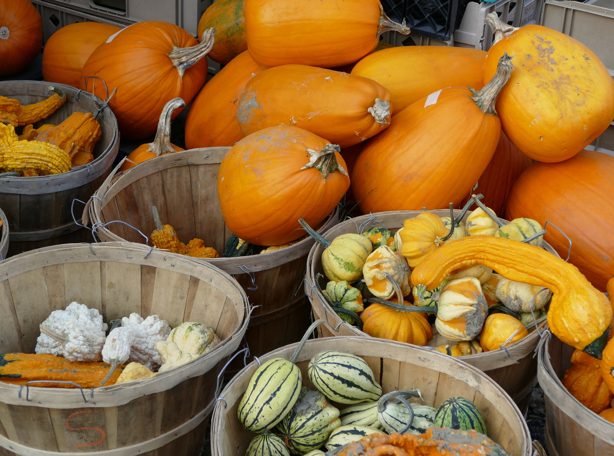 autumn_pumpkins-gourds.JPG