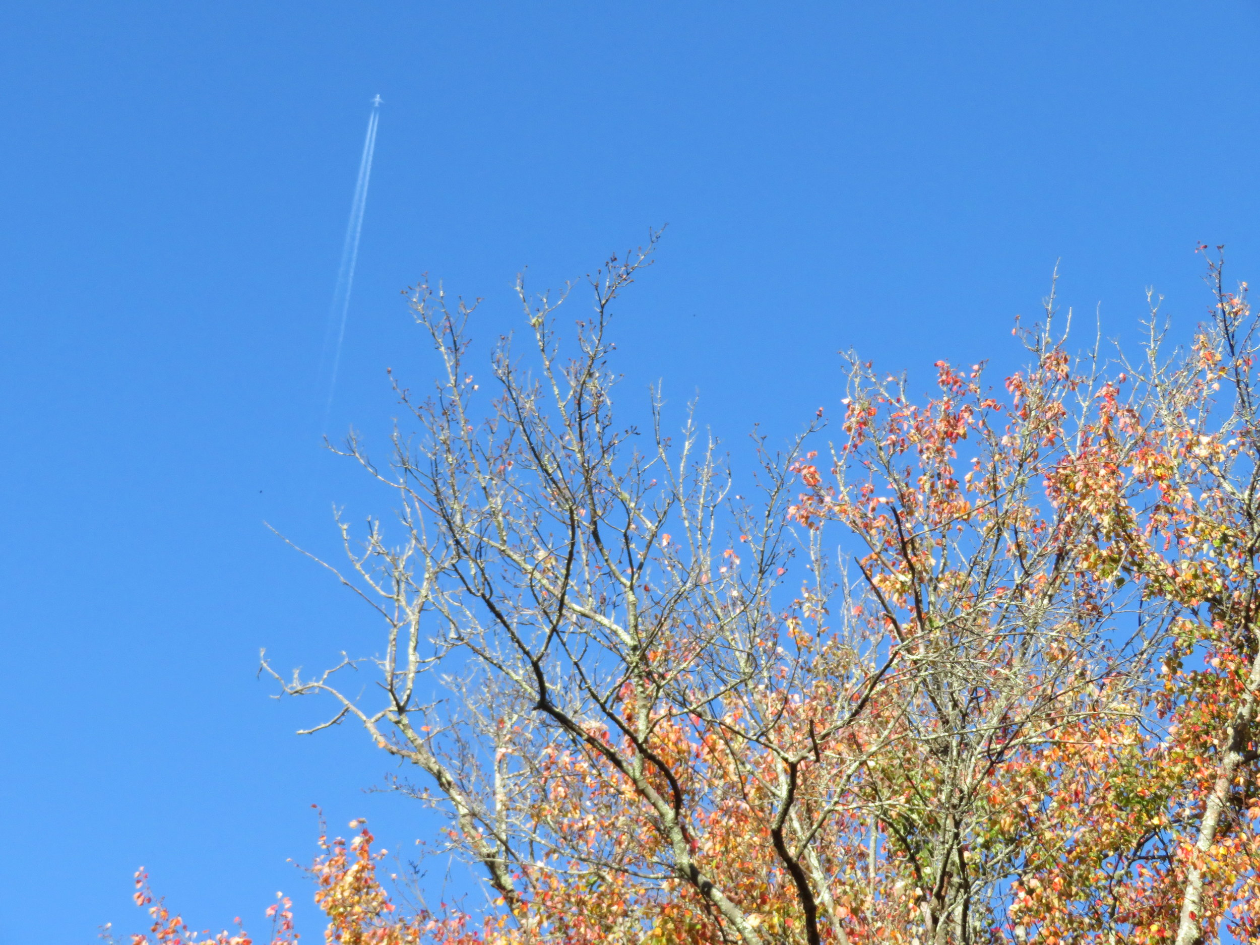 The sky is blue and clear except for the contrails.