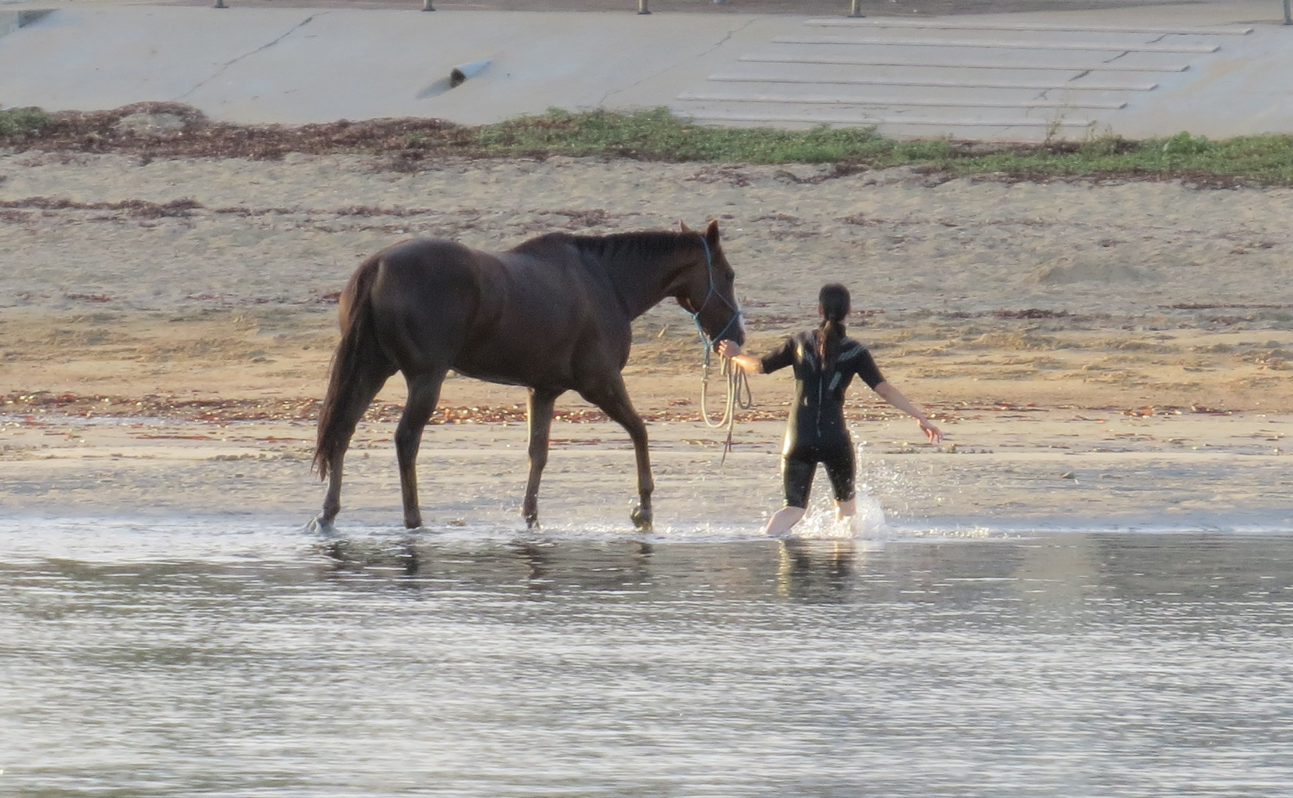 Taking a horse for a walk on the beach in the early morning at Port Lincoln