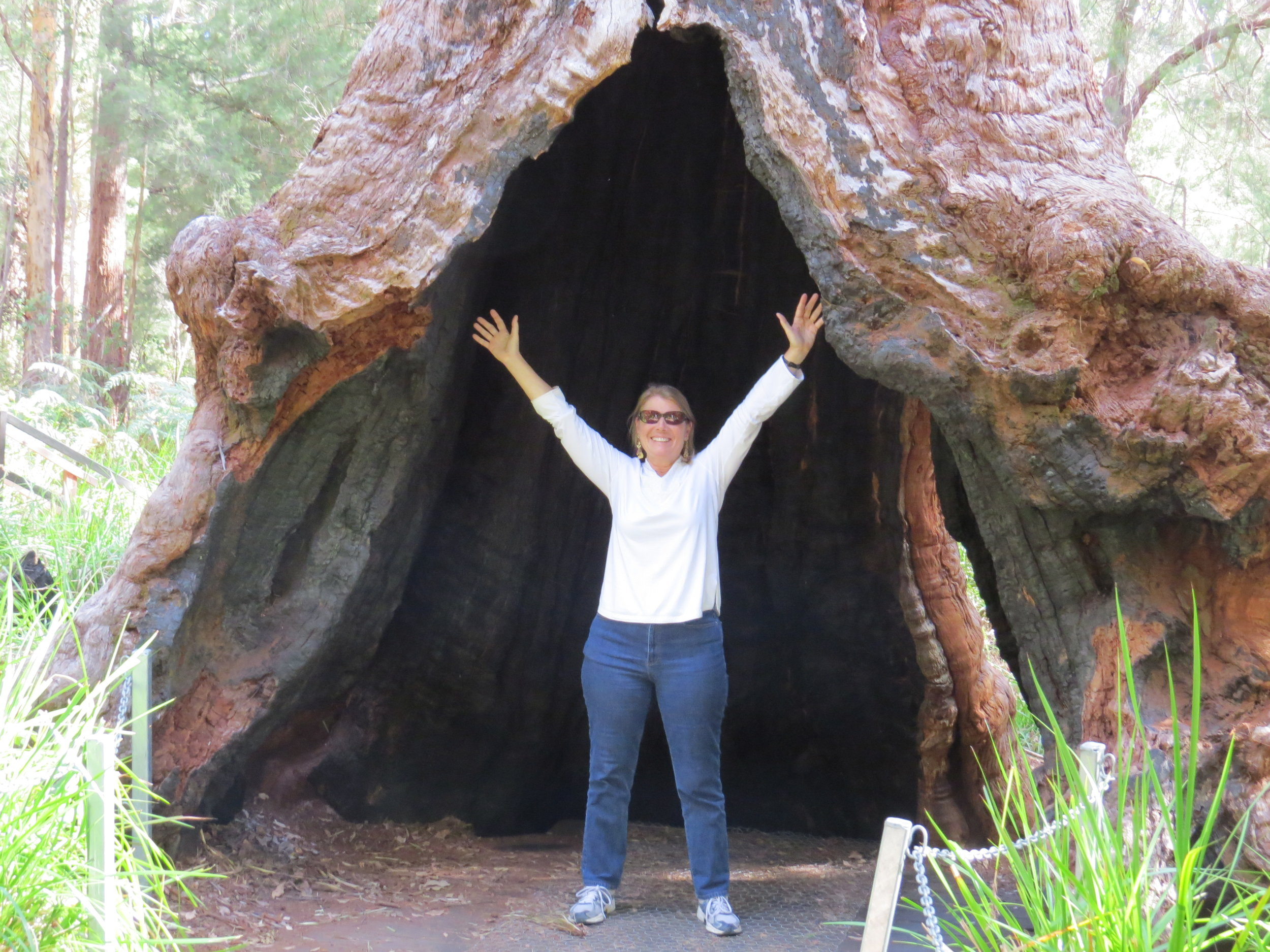 Inside a giant red tingle tree at the Valley of the Giants, Tree Top Walk