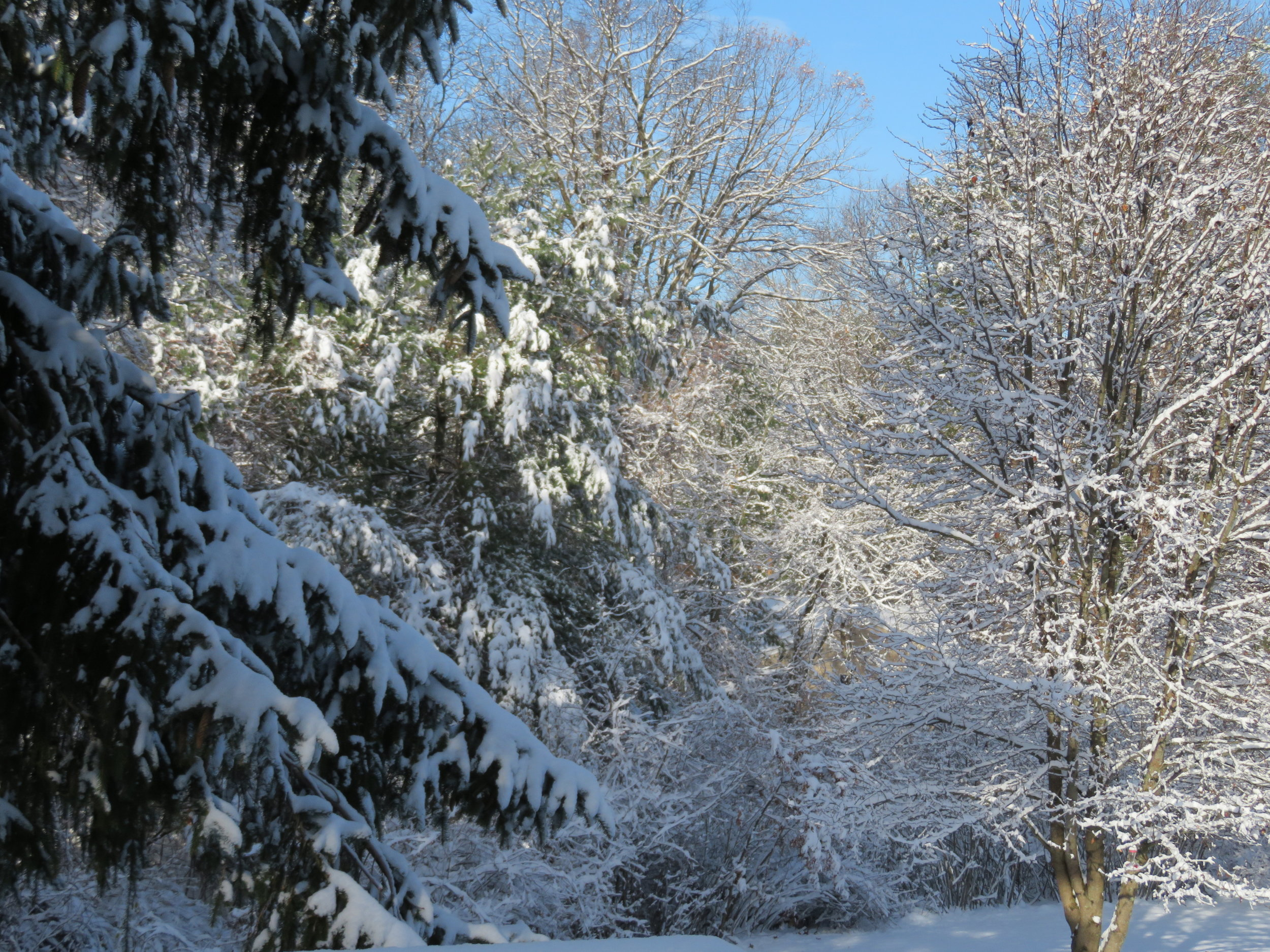 Morning after the first snow ... winter wonderland!