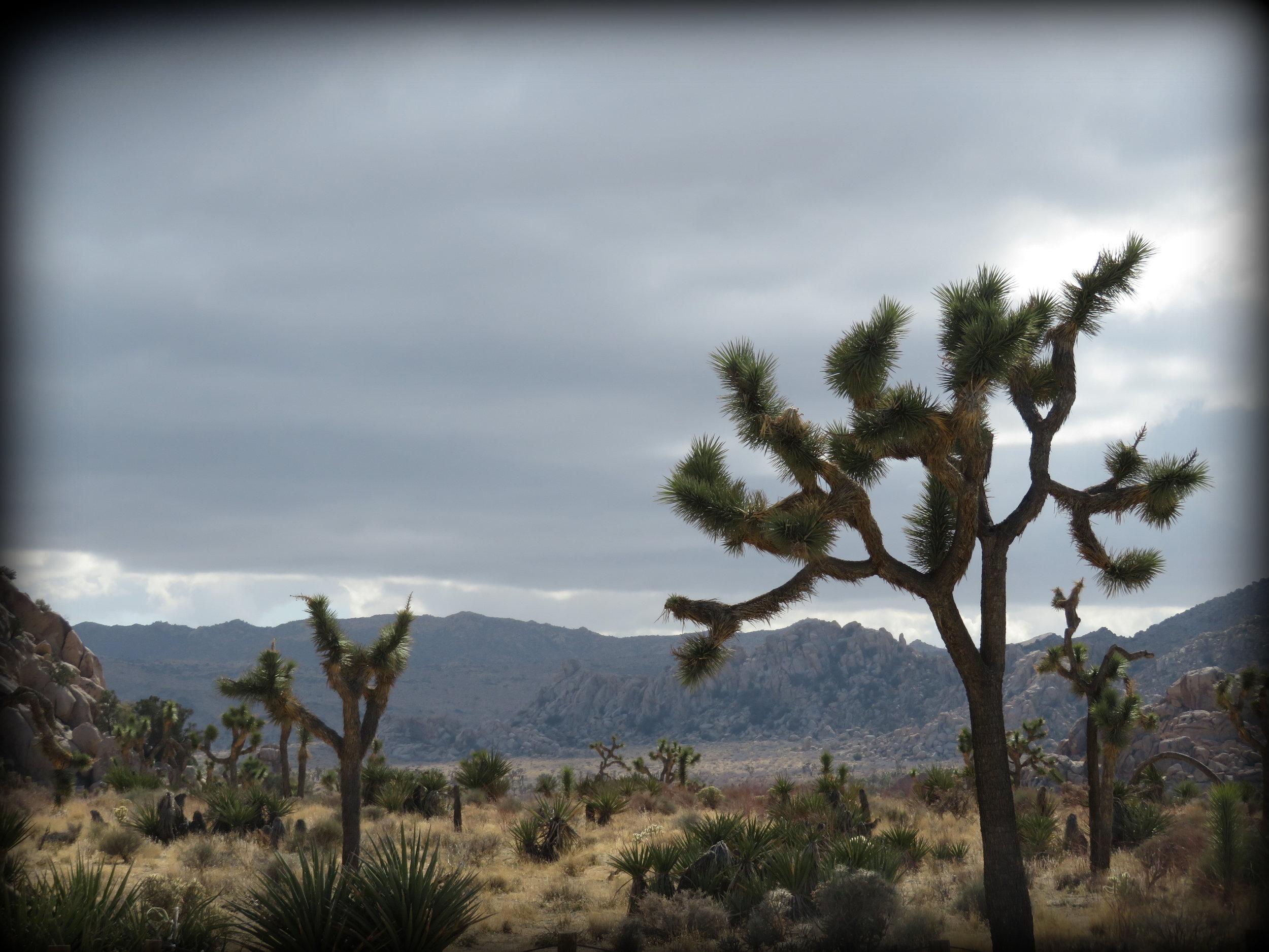 Joshua Tree National Park , California - 2018