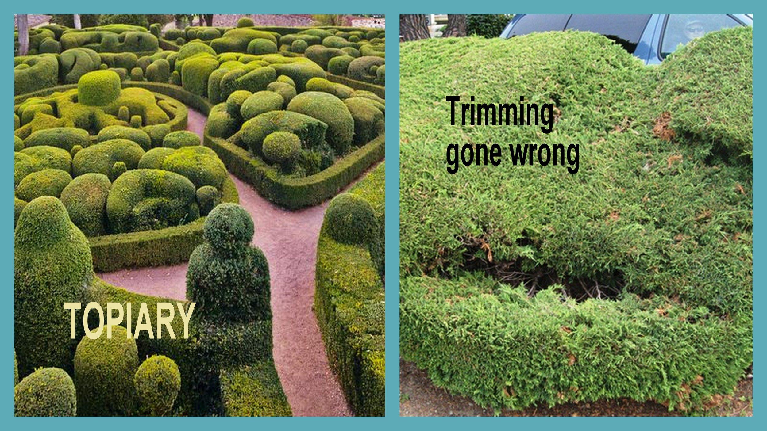 topiary vs gone wrong.jpg