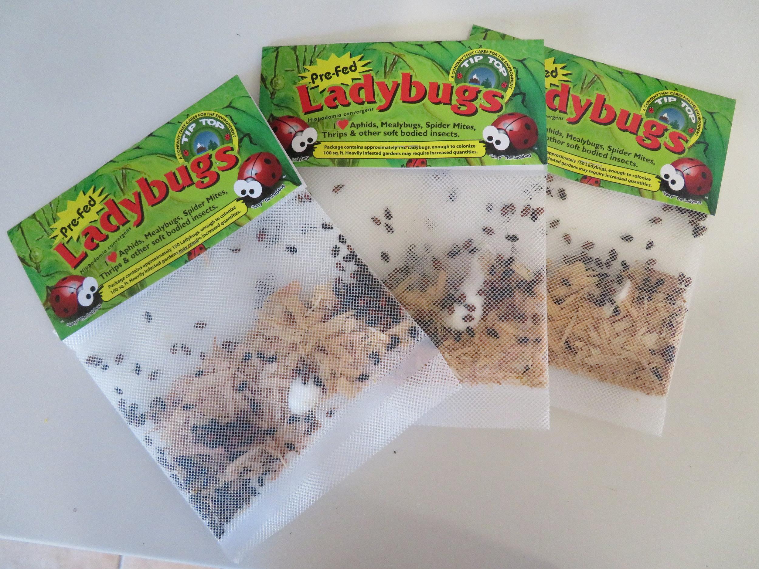 ladybug packets.JPG